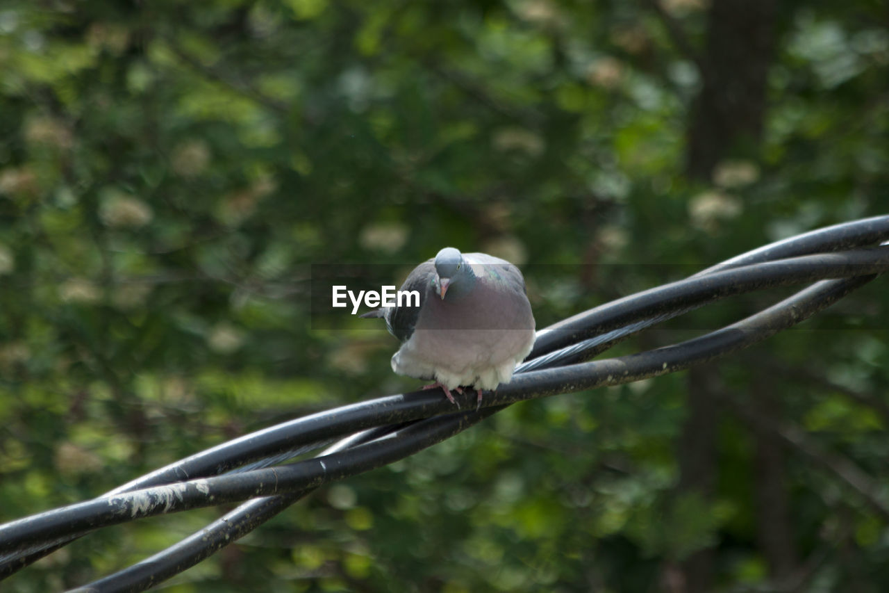 bird, animal themes, one animal, animals in the wild, animal wildlife, tree, day, focus on foreground, outdoors, perching, nature, no people, branch, close-up