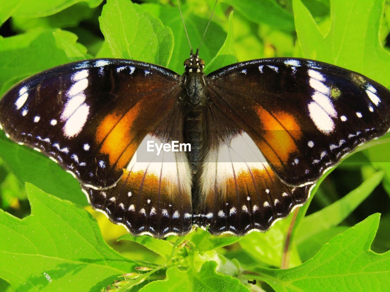 animal themes, insect, animal wildlife, one animal, invertebrate, animal, animals in the wild, leaf, butterfly - insect, animal wing, plant part, close-up, beauty in nature, green color, nature, plant, no people, animal markings, day, animal body part, butterfly, outdoors