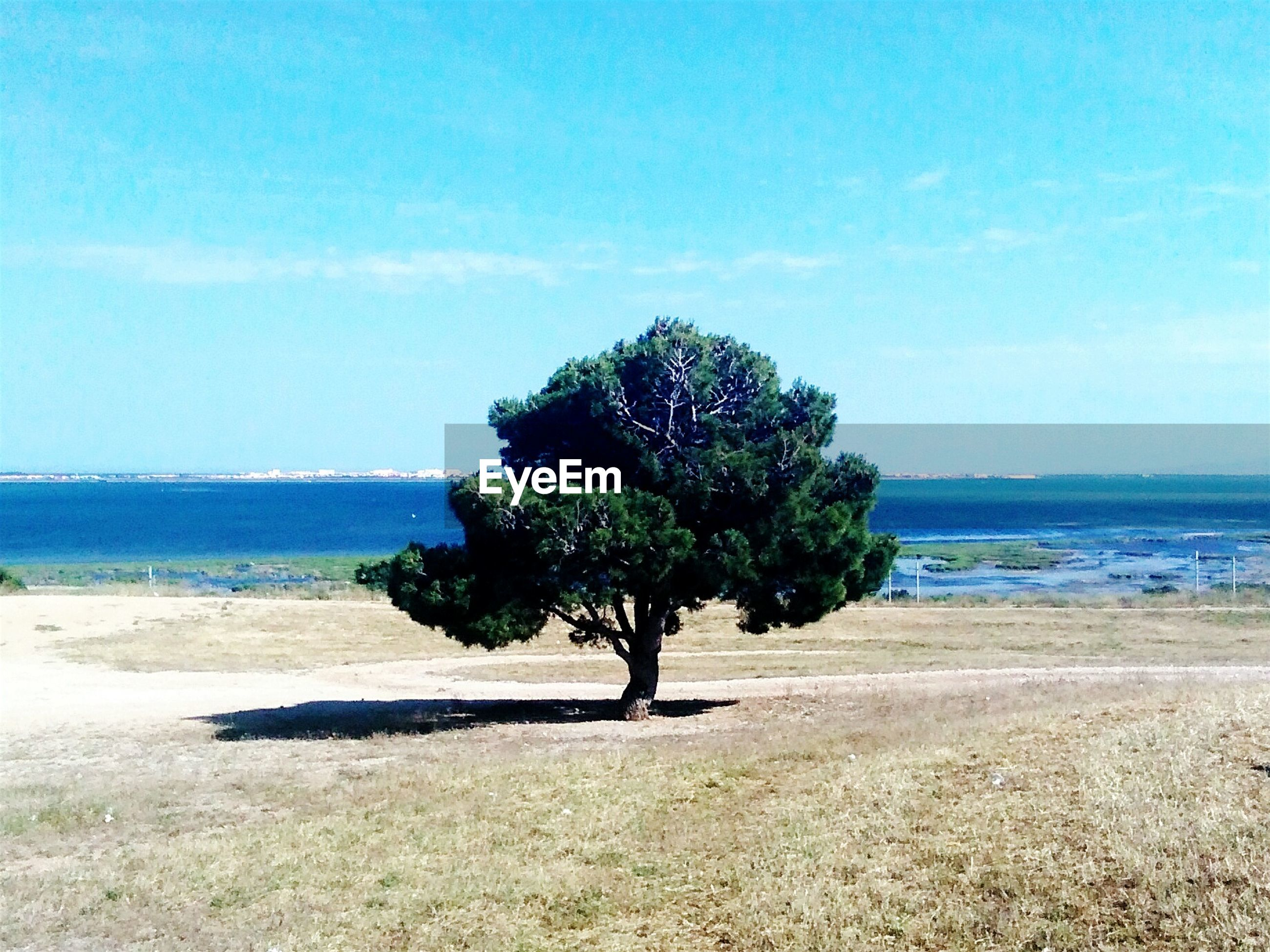 Tree growing on field in front of blue sea against sky