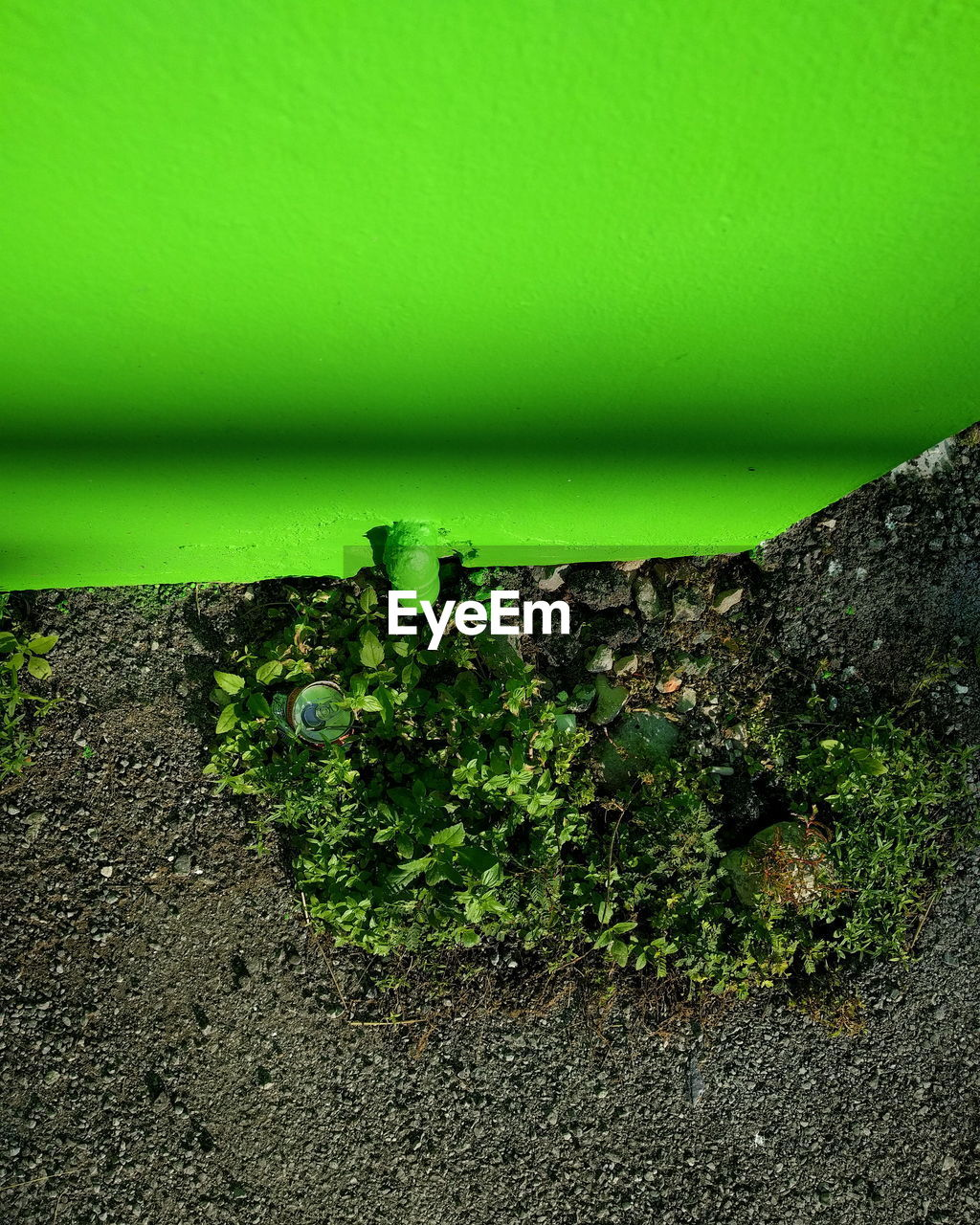 green color, growth, no people, plant, day, nature, outdoors, close-up