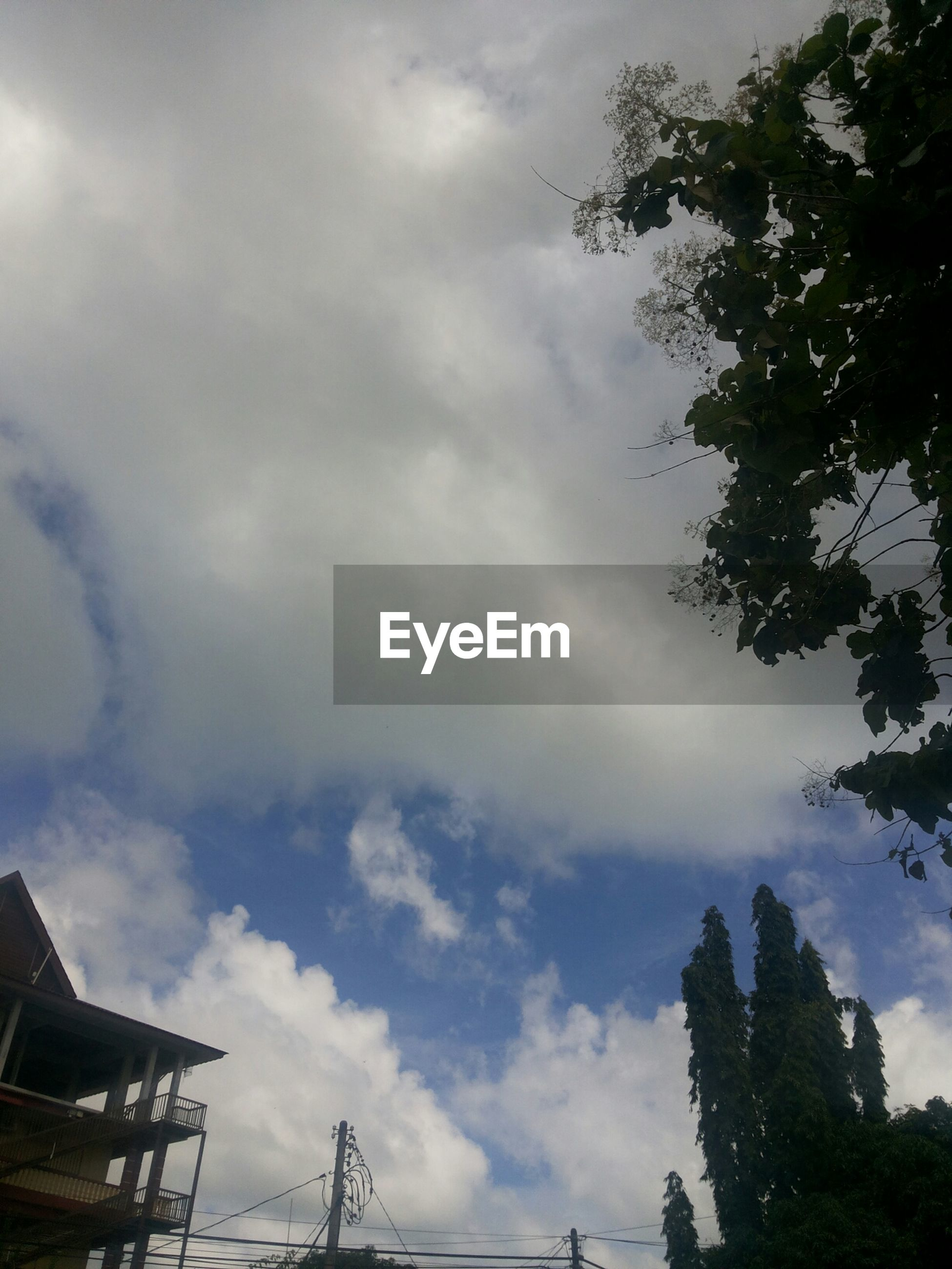 low angle view, sky, tree, cloud - sky, built structure, architecture, building exterior, cloudy, cloud, nature, silhouette, outdoors, day, growth, no people, branch, building, city, high section, tall - high