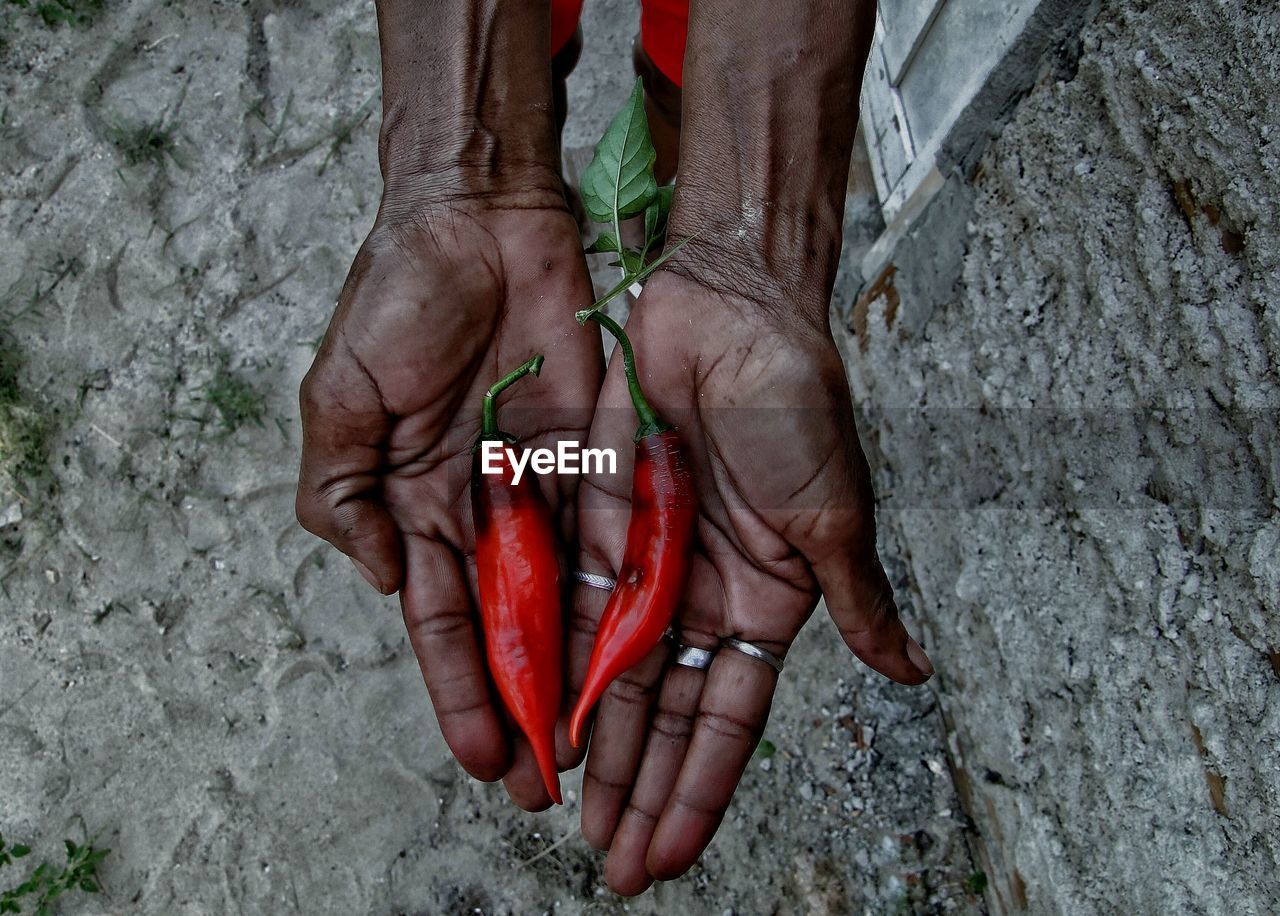 Cropped Hands Of Woman Holding Red Chili Over Rock