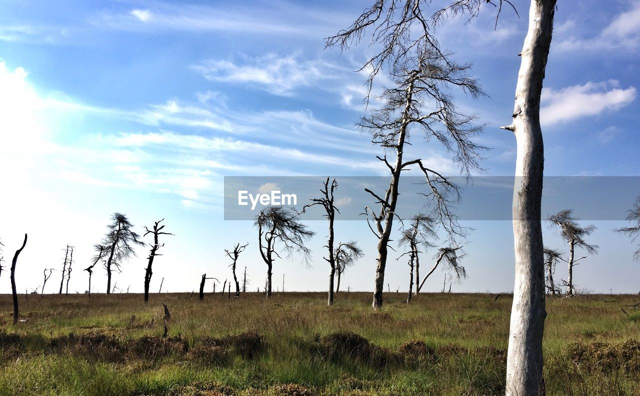 landscape, tree, tranquility, tranquil scene, nature, solitude, field, tree trunk, day, sky, no people, beauty in nature, outdoors, grass, scenics, bare tree, lone, growth