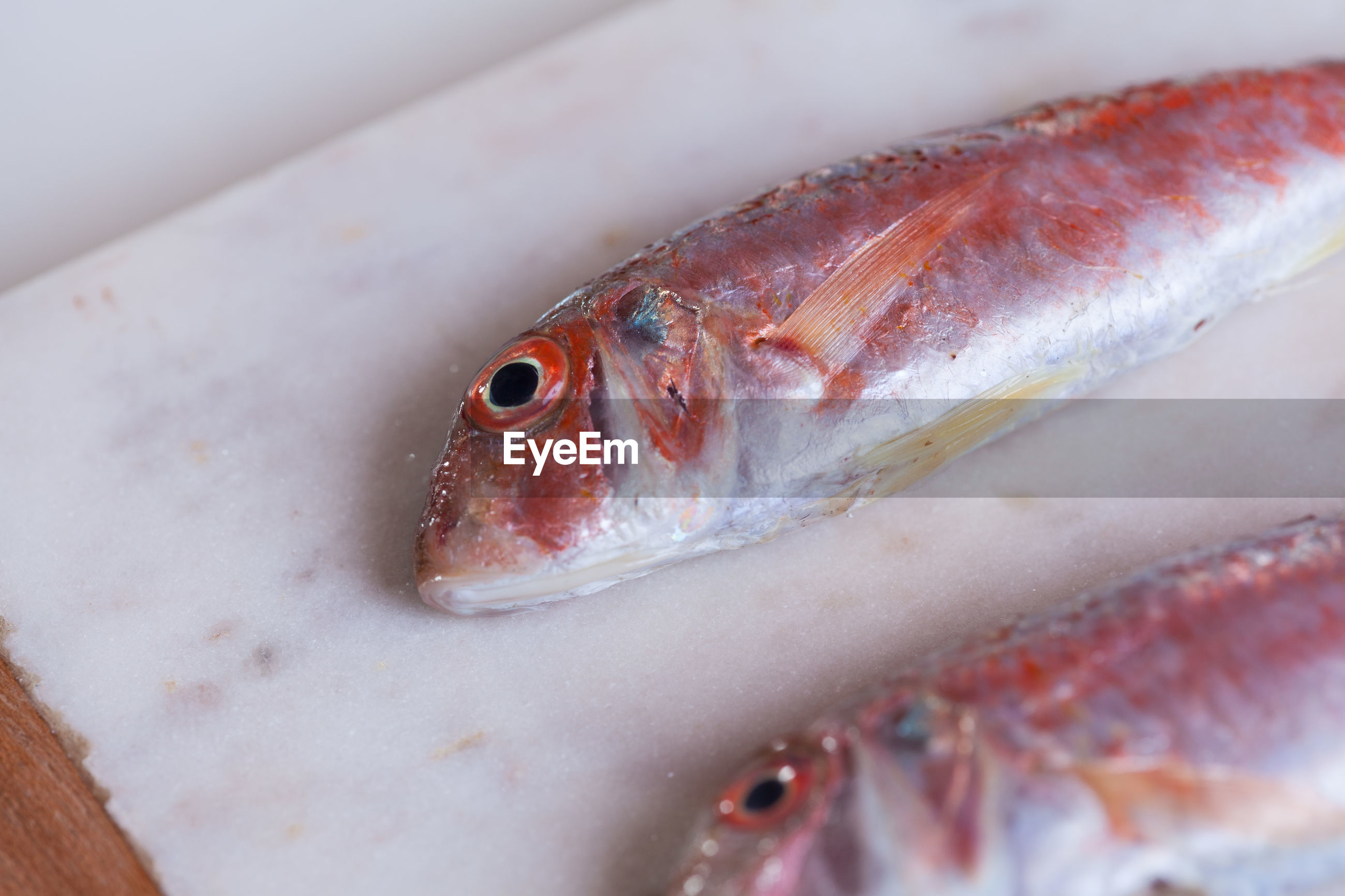 CLOSE-UP OF FISH IN PLATE