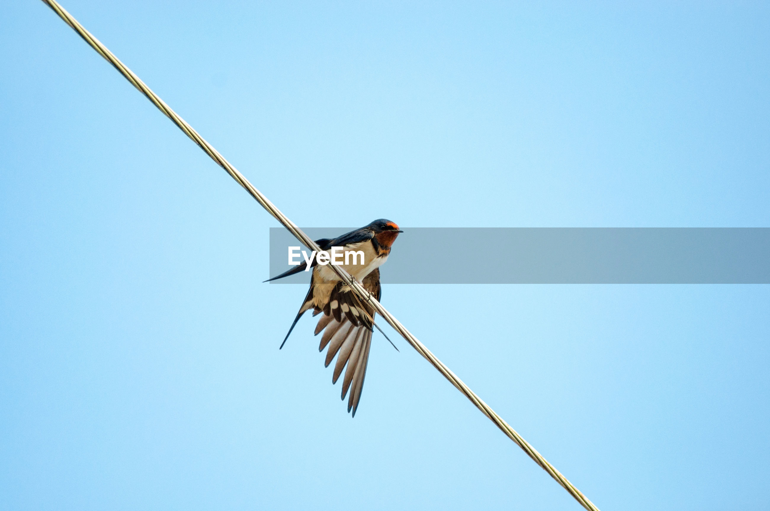 LOW ANGLE VIEW OF BIRD ON CABLE AGAINST CLEAR SKY