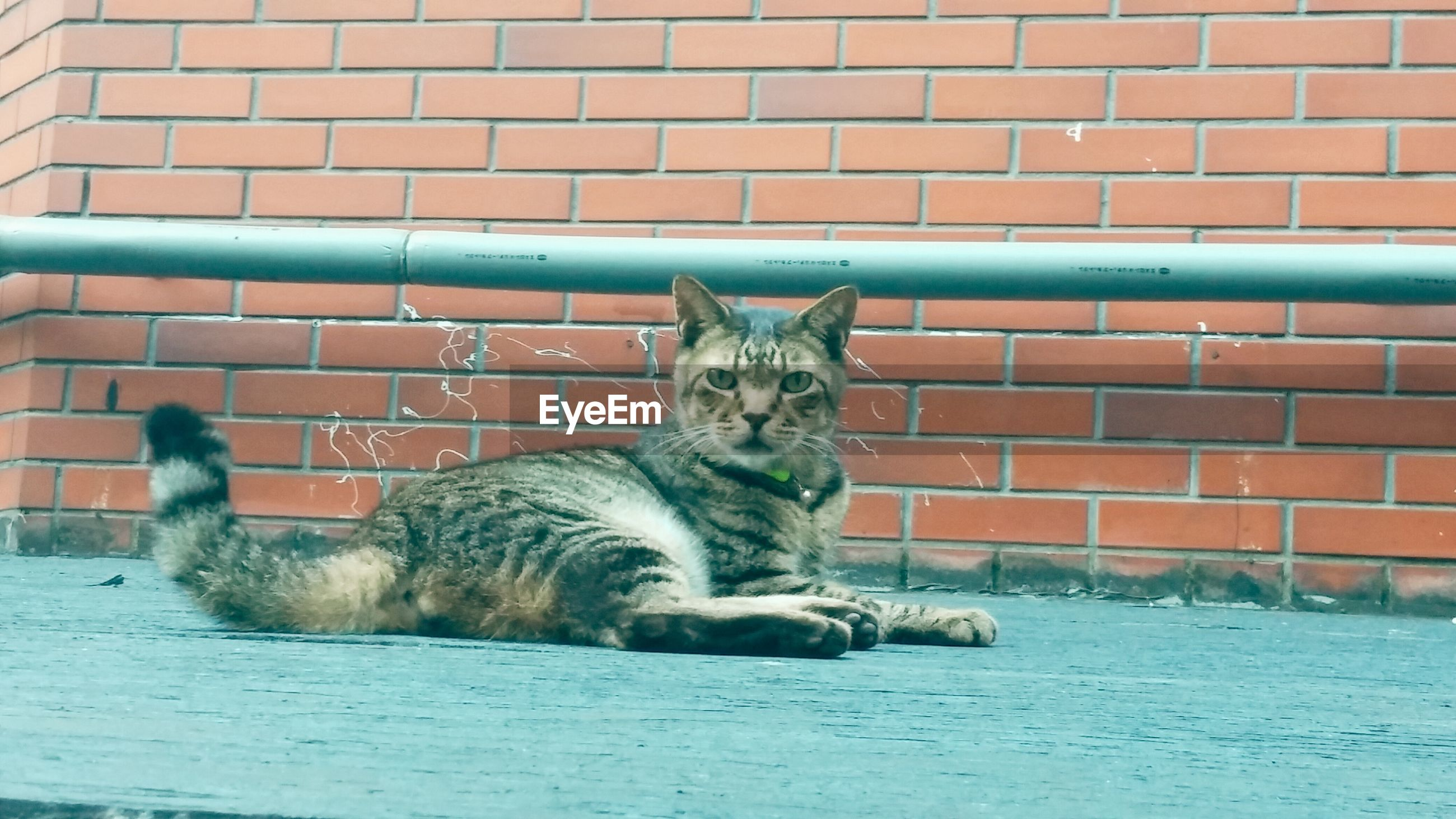 animal themes, mammal, one animal, domestic animals, pets, domestic cat, cat, feline, wall - building feature, built structure, building exterior, architecture, relaxation, portrait, sitting, lying down, looking at camera, whisker, brick wall