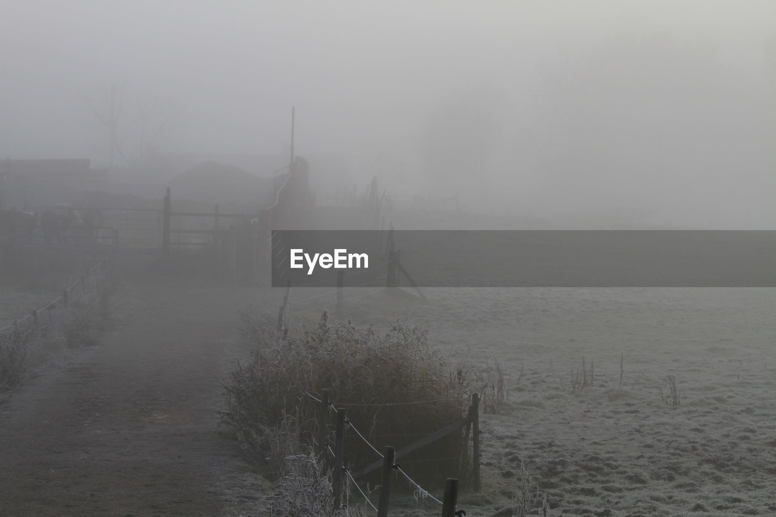Idyllic view of field in foggy weather