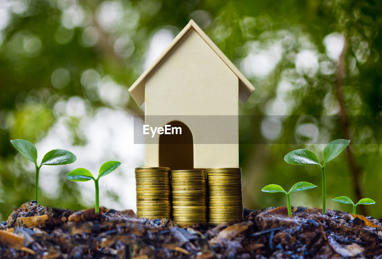 leaf, plant part, plant, growth, nature, no people, beginnings, selective focus, wealth, day, close-up, finance, architecture, coin, focus on foreground, building, outdoors, built structure, tree, savings, small, luxury