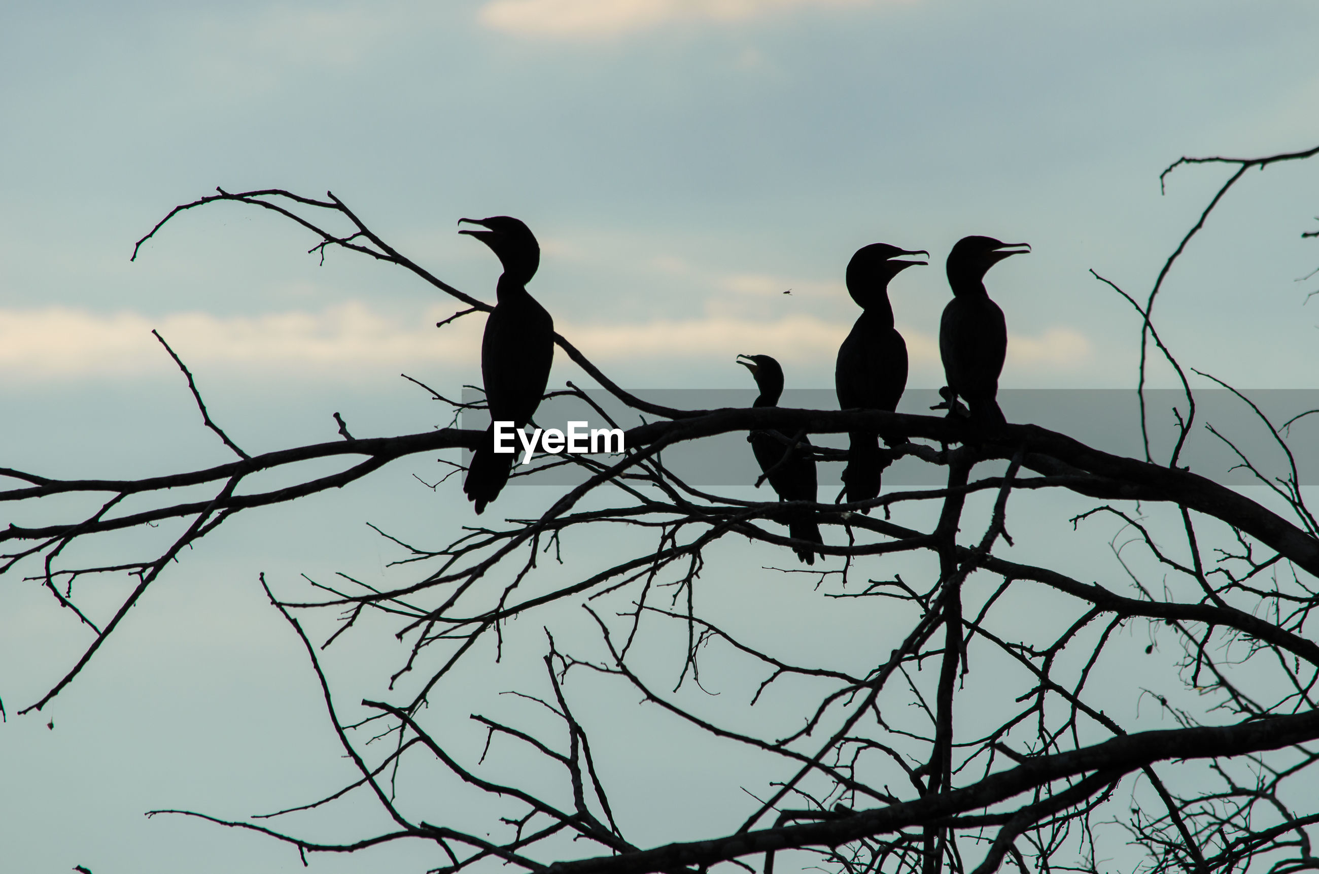 SILHOUETTE BIRD PERCHING ON BARE TREE AGAINST SKY