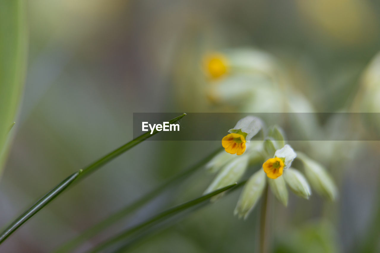 flowering plant, flower, growth, plant, fragility, vulnerability, freshness, beauty in nature, close-up, petal, flower head, inflorescence, focus on foreground, selective focus, nature, yellow, no people, day, plant stem, outdoors, pollen, small