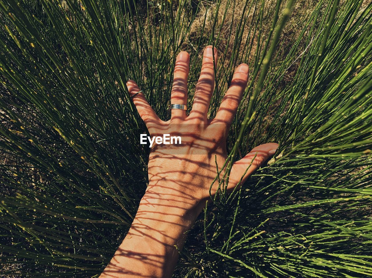 Cropped Hand Of Person Over Grassy Field