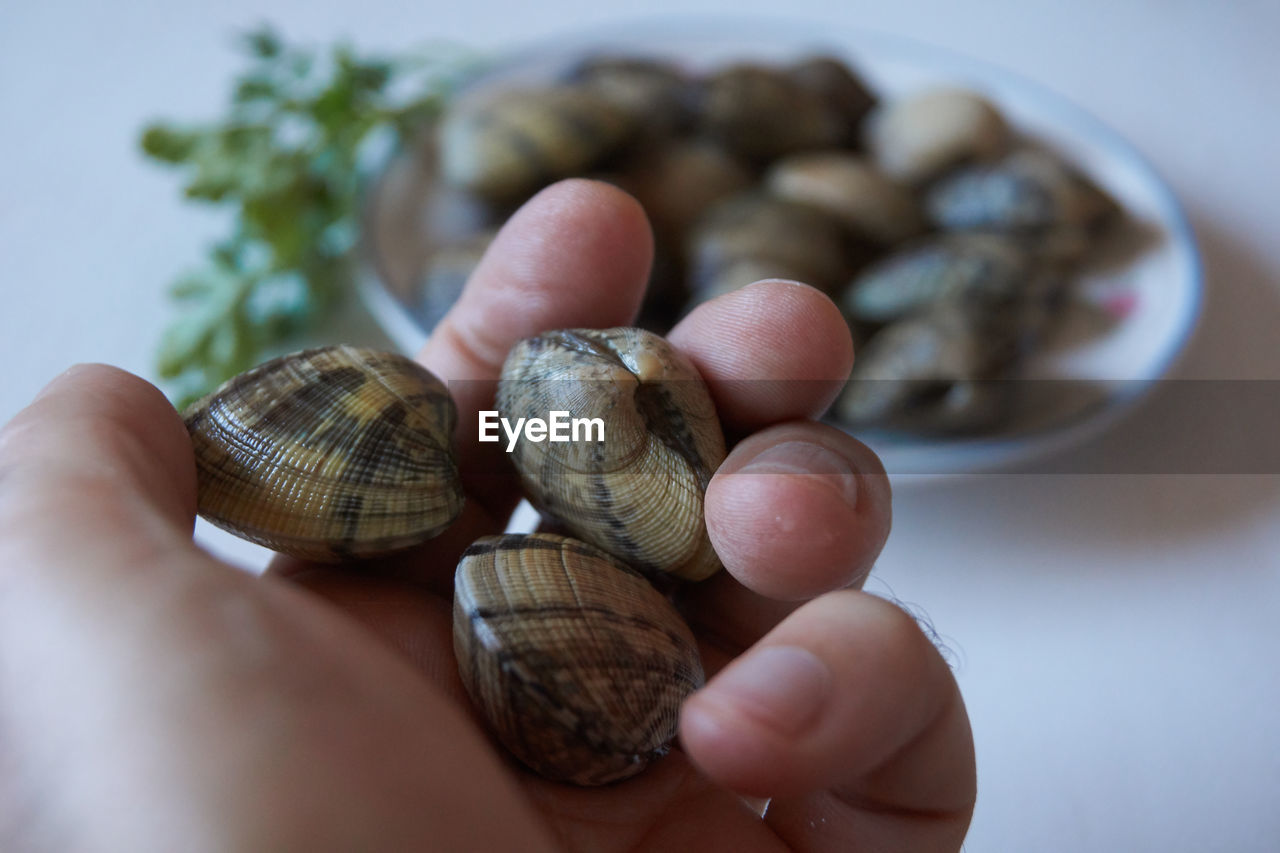 Delicious clams from cantabria very fresh