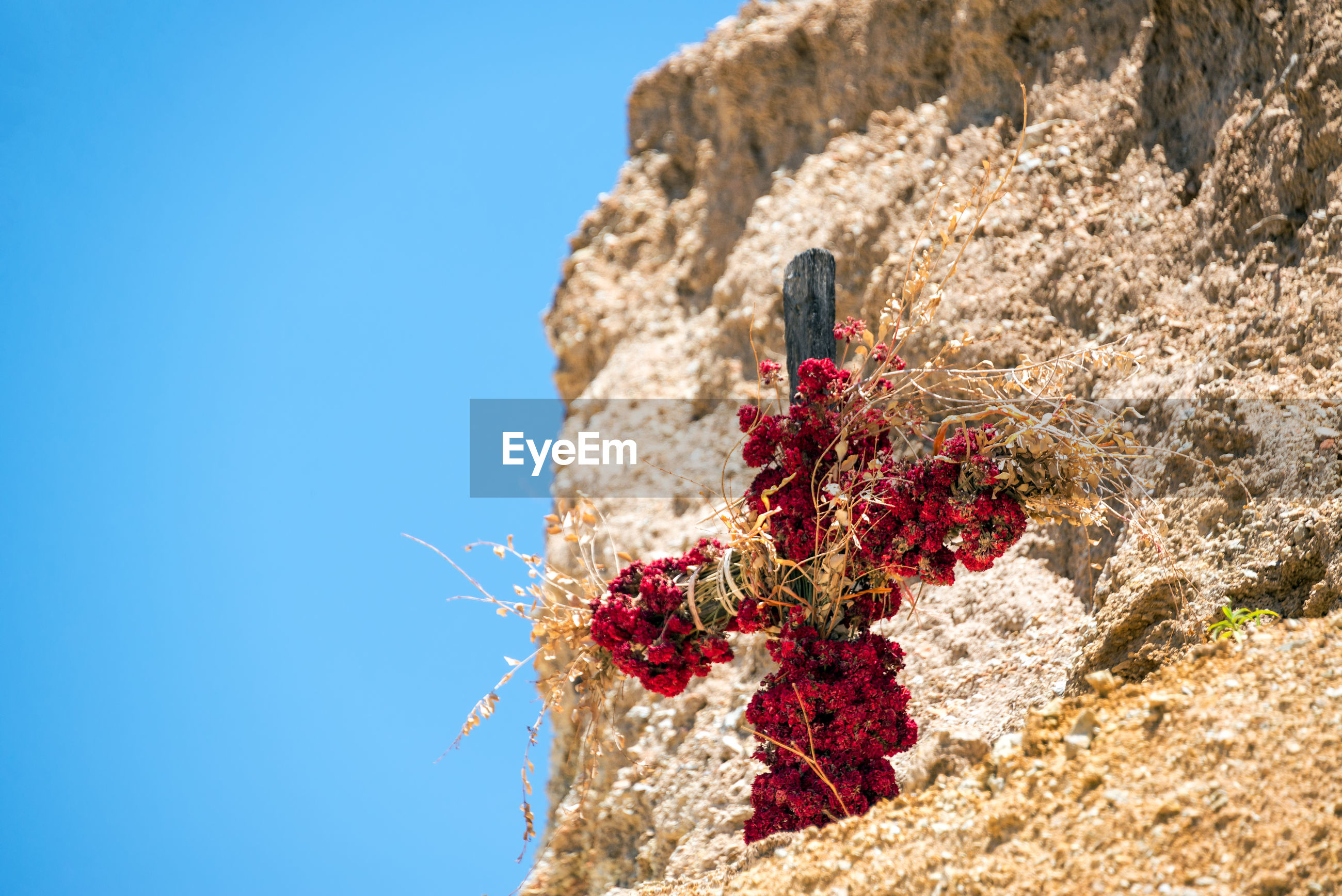 Low angle view of red flowers on cross by rock against clear blue sky