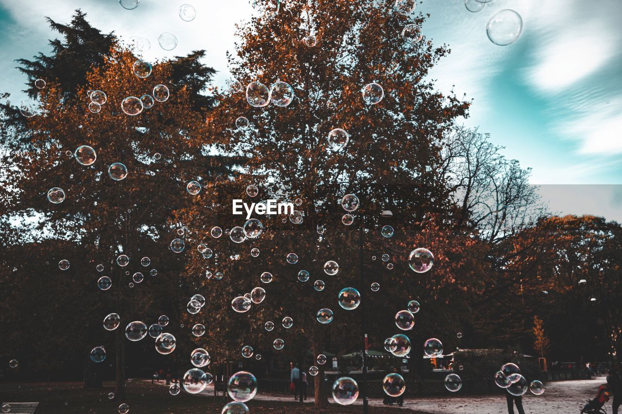 tree, bubble, nature, plant, sky, day, transparent, water, fragility, no people, soap sud, outdoors, vulnerability, bubble wand, drop, sphere, motion, mid-air, wet, rain