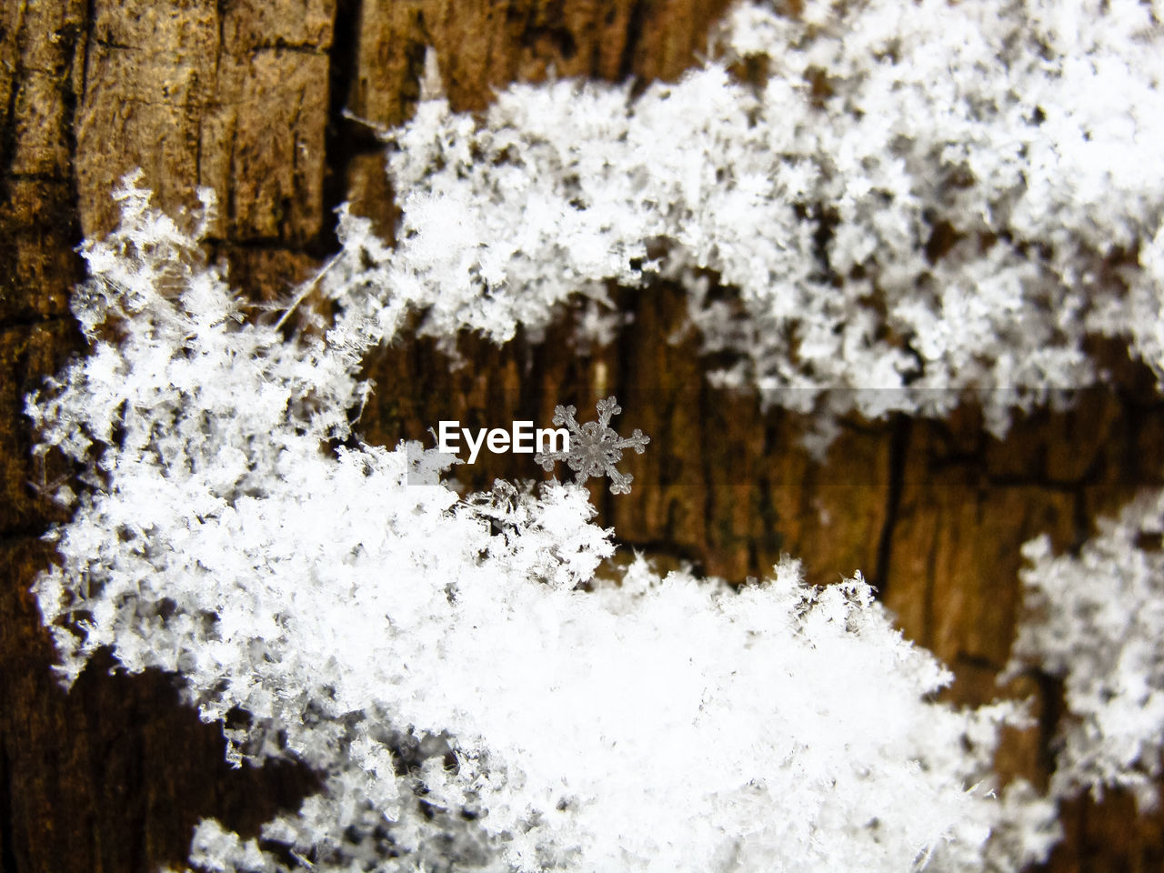 snow, cold temperature, winter, plant, white color, beauty in nature, tree, nature, frozen, day, no people, close-up, covering, tranquility, focus on foreground, ice, outdoors, wood - material, branch, lichen, coniferous tree