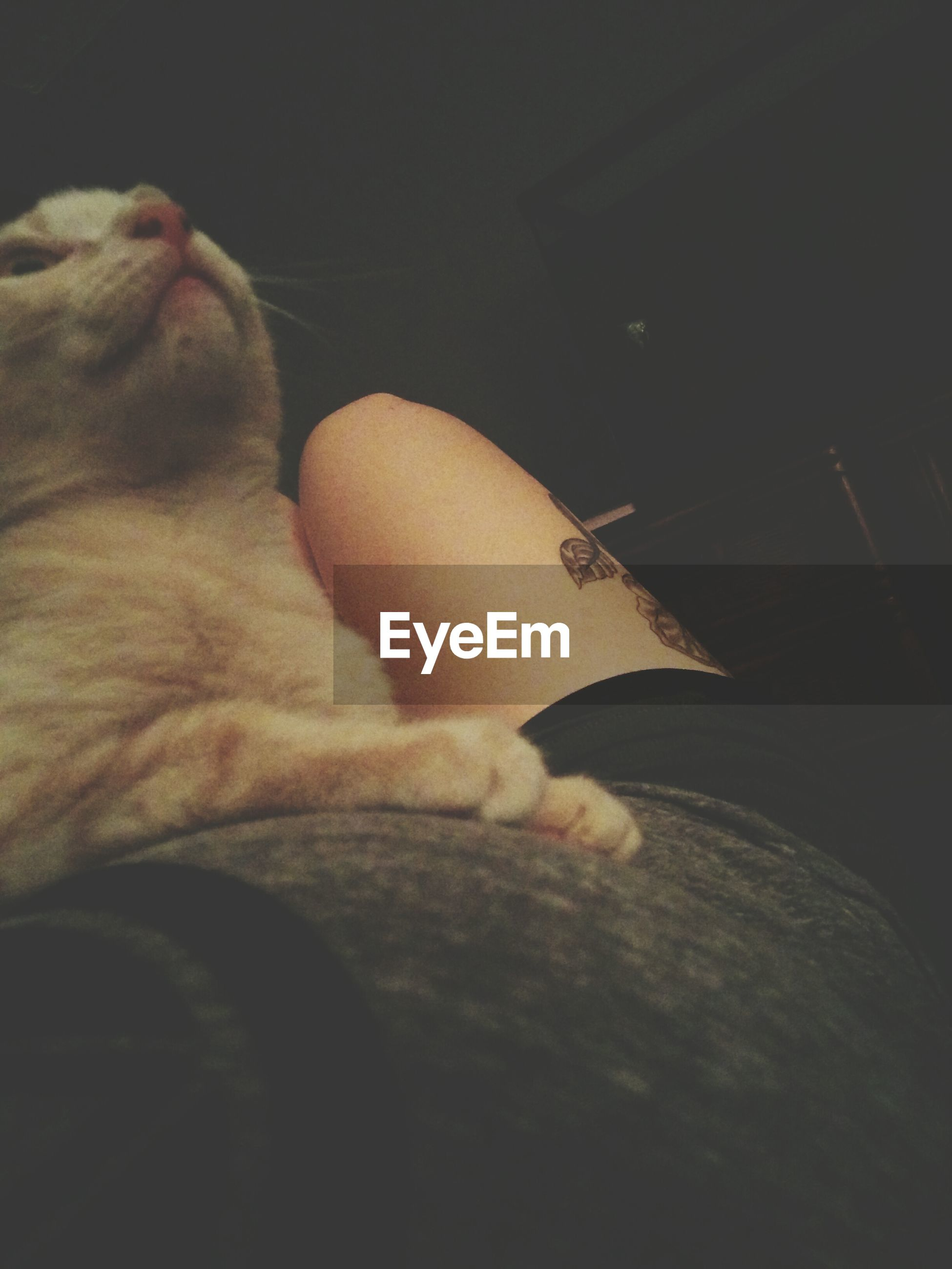 domestic animals, indoors, pets, mammal, one animal, domestic cat, animal themes, relaxation, cat, sleeping, resting, lying down, home interior, feline, one person, bed, dog, eyes closed, high angle view, home