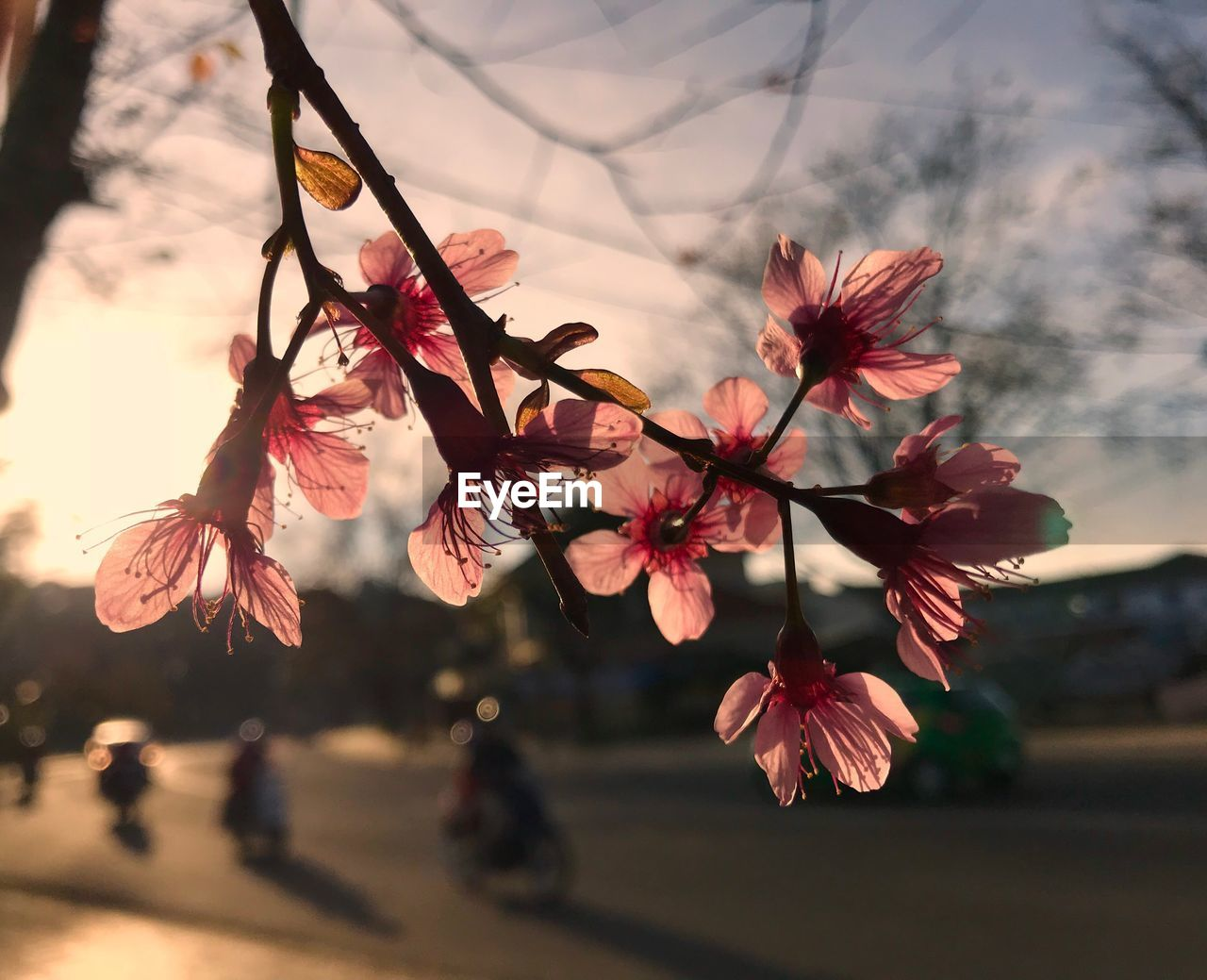 flower, growth, nature, close-up, focus on foreground, beauty in nature, fragility, outdoors, tree, no people, day, freshness, flower head, sky