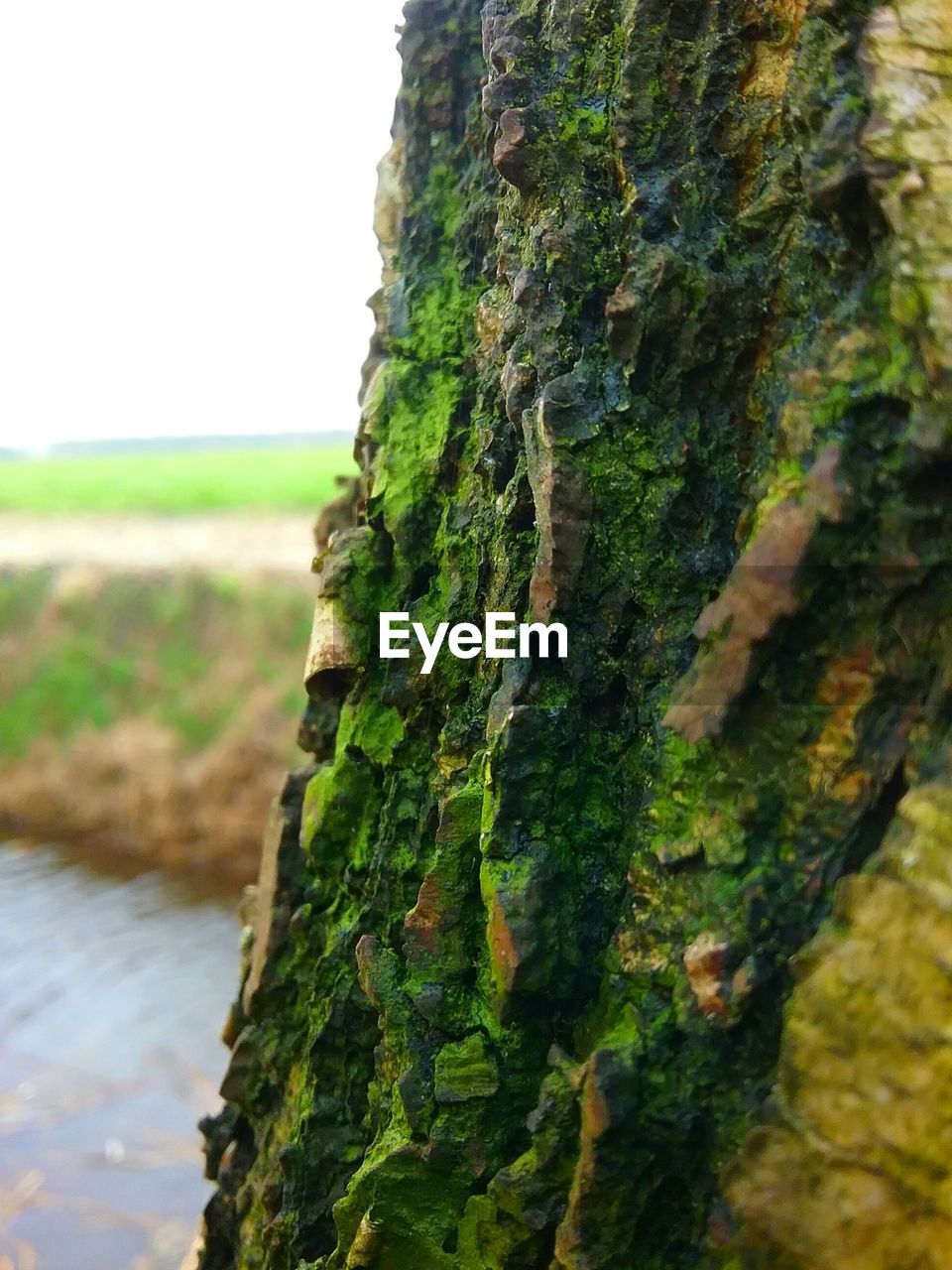 moss, tree trunk, nature, day, rough, green color, tree, lichen, focus on foreground, no people, outdoors, close-up, textured, growth, beauty in nature, sky