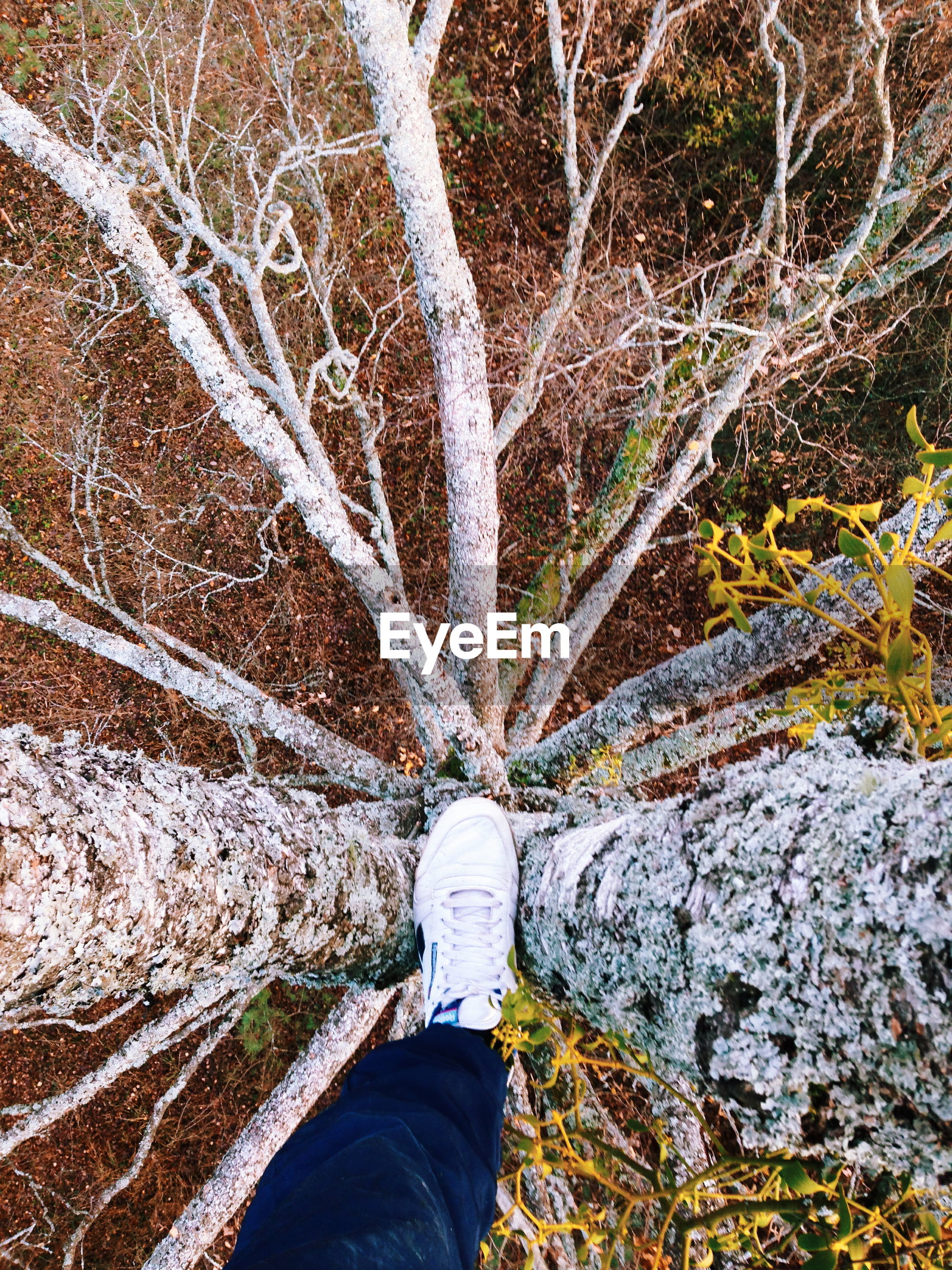 Low section of man standing on tree in forest