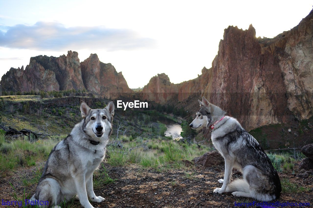 Siberian Huskies Sitting On Field Against Rock Formations