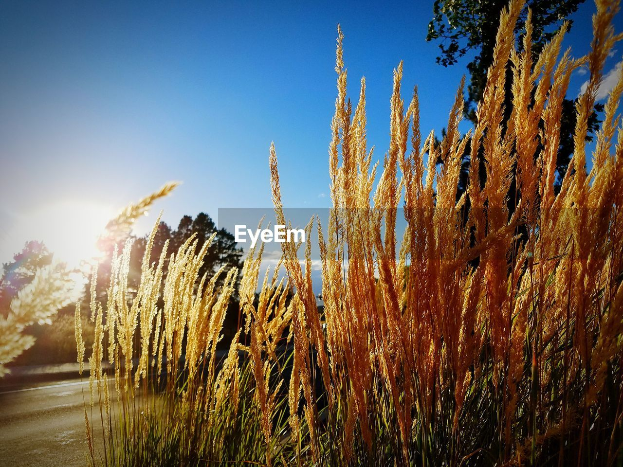 growth, nature, tranquility, tranquil scene, plant, sunlight, no people, beauty in nature, outdoors, day, scenics, sky, clear sky, tree, close-up