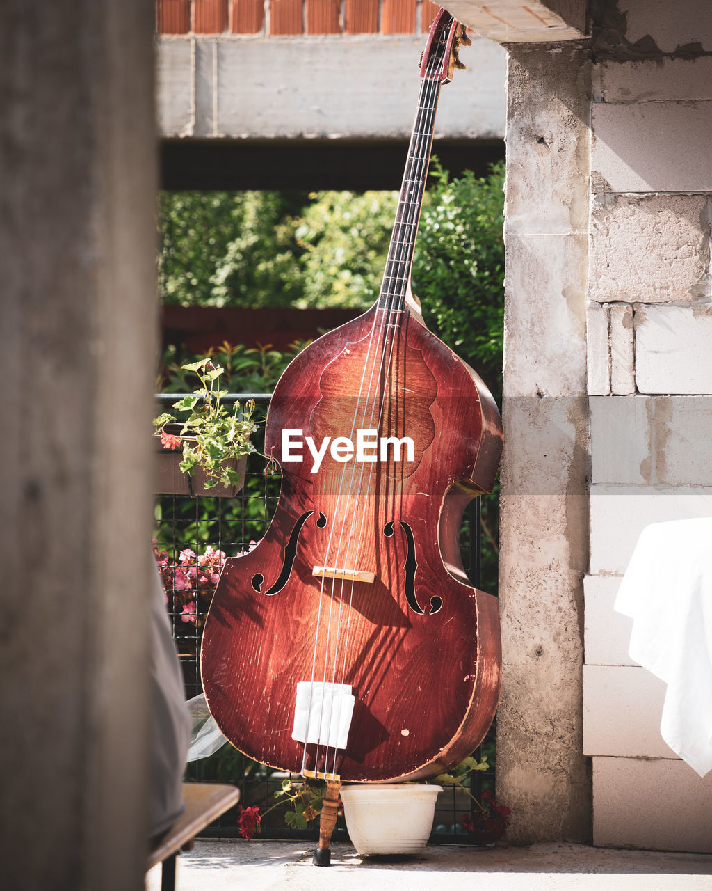 musical instrument, music, string instrument, arts culture and entertainment, string, musical equipment, wood - material, musical instrument string, day, no people, violin, cello, close-up, hanging, outdoors, nature, still life, brown, architecture, man made, double bass