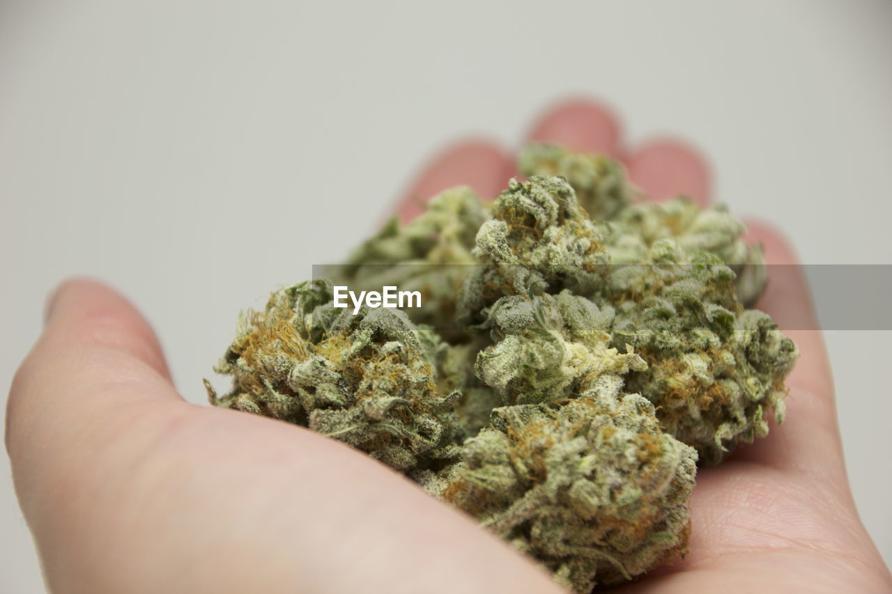 human hand, hand, human body part, holding, one person, close-up, personal perspective, marijuana - herbal cannabis, indoors, healthcare and medicine, unrecognizable person, narcotic, selective focus, food and drink, body part, real people, lifestyles, herbal medicine, medical cannabis, finger