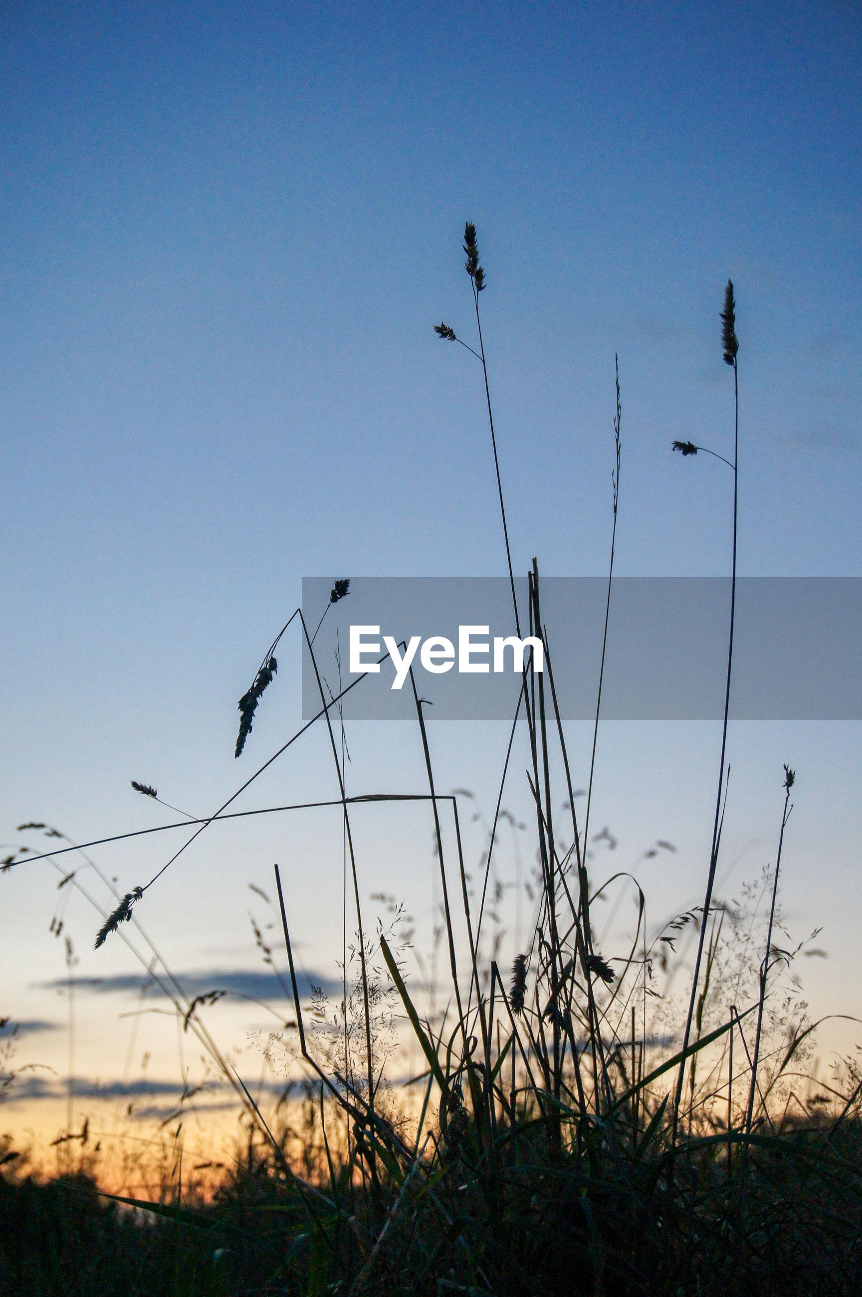 SILHOUETTE OF BIRDS FLYING OVER FIELD AGAINST SKY