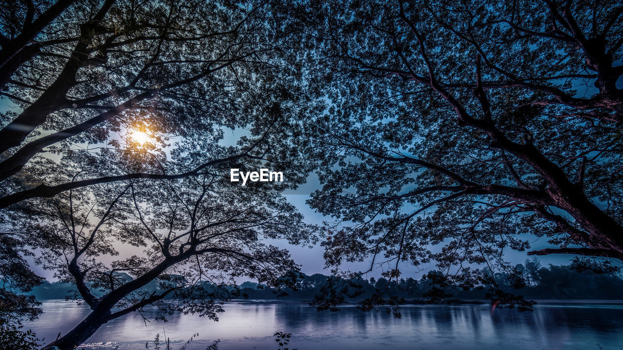tree, plant, water, branch, nature, beauty in nature, lake, sky, tranquility, scenics - nature, tranquil scene, no people, silhouette, night, illuminated, waterfront, outdoors, reflection