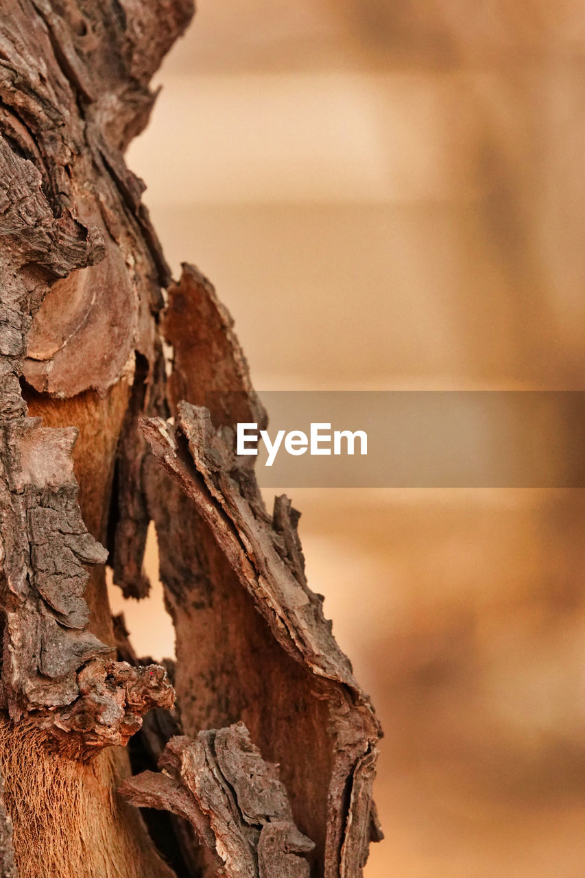 no people, focus on foreground, close-up, nature, tranquility, textured, brown, outdoors, wood - material, beauty in nature, day, rough, tree, rock, sky, backgrounds, sea, scenics - nature, land, rock formation