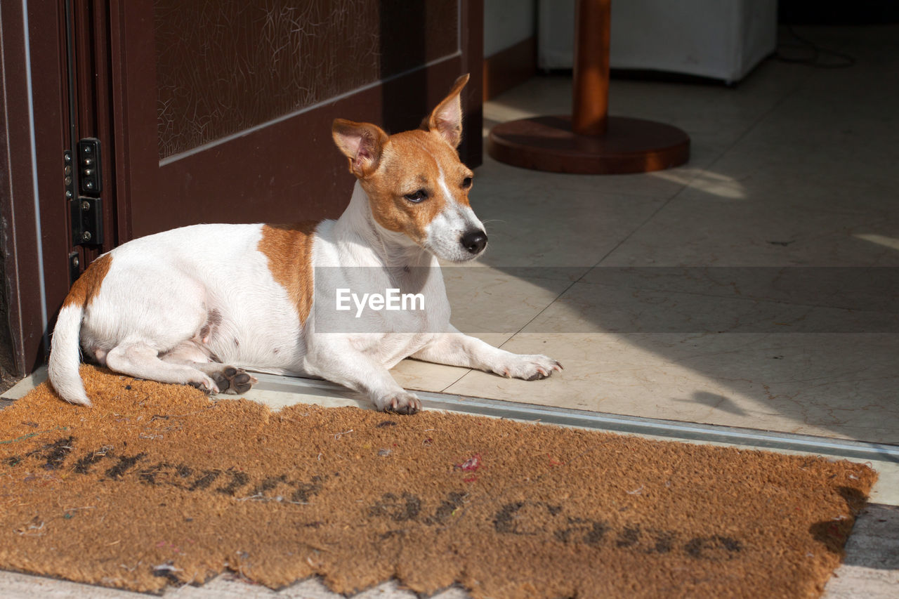 Close-up of dog sitting at doorway