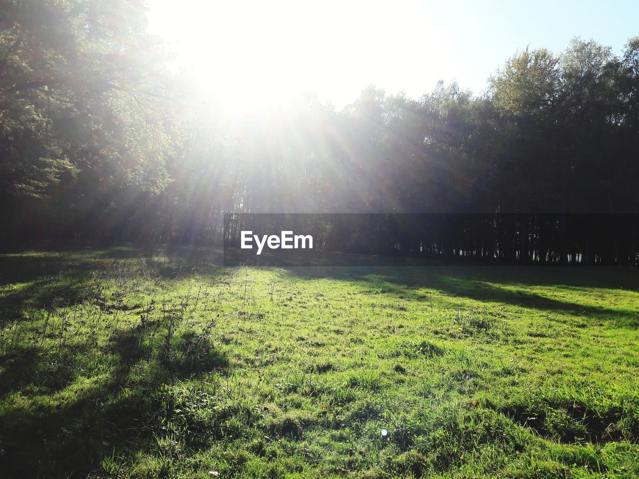 sunbeam, nature, sunlight, tree, grass, tranquility, day, no people, tranquil scene, beauty in nature, growth, outdoors, landscape