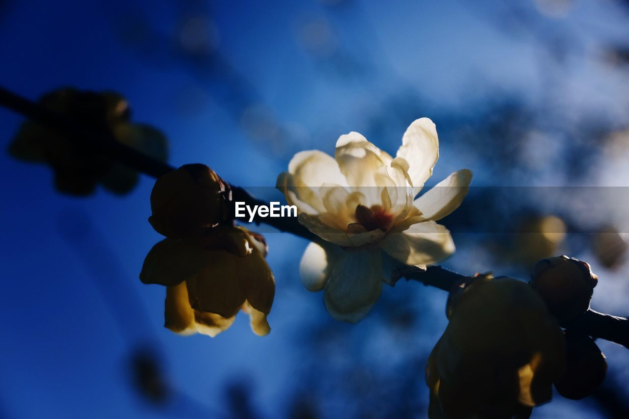 flower, growth, nature, beauty in nature, fragility, petal, no people, close-up, freshness, plant, blooming, flower head, outdoors, sky, day