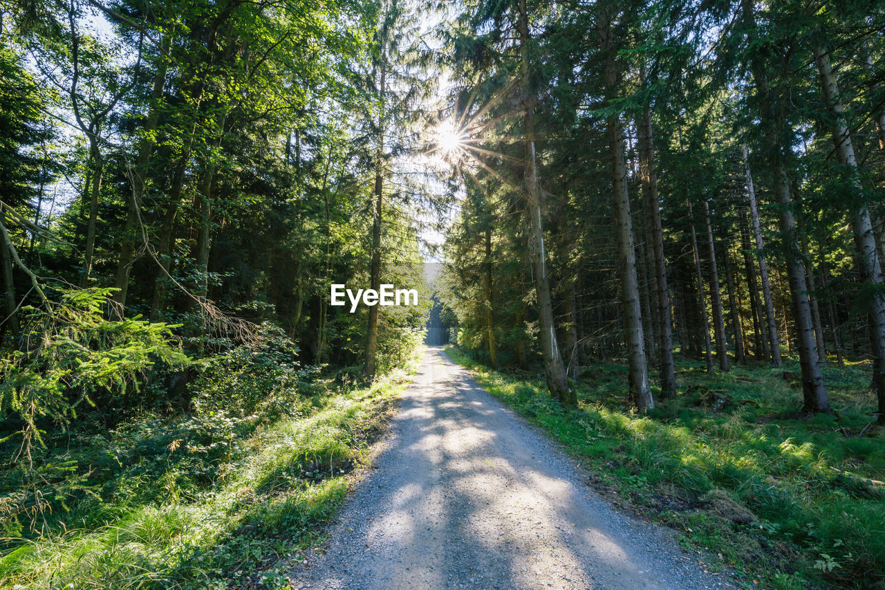 tree, plant, forest, land, sunlight, nature, direction, road, the way forward, tranquility, beauty in nature, day, scenics - nature, growth, green color, no people, tranquil scene, woodland, transportation, non-urban scene, diminishing perspective, outdoors, treelined
