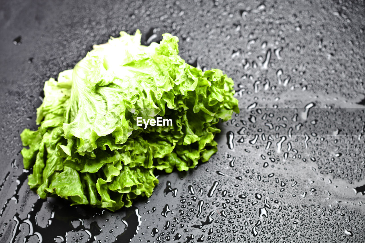freshness, food and drink, healthy eating, food, vegetable, wellbeing, close-up, green color, no people, indoors, still life, lettuce, high angle view, nature, water, selective focus, raw food, leaf, day, vegetarian food