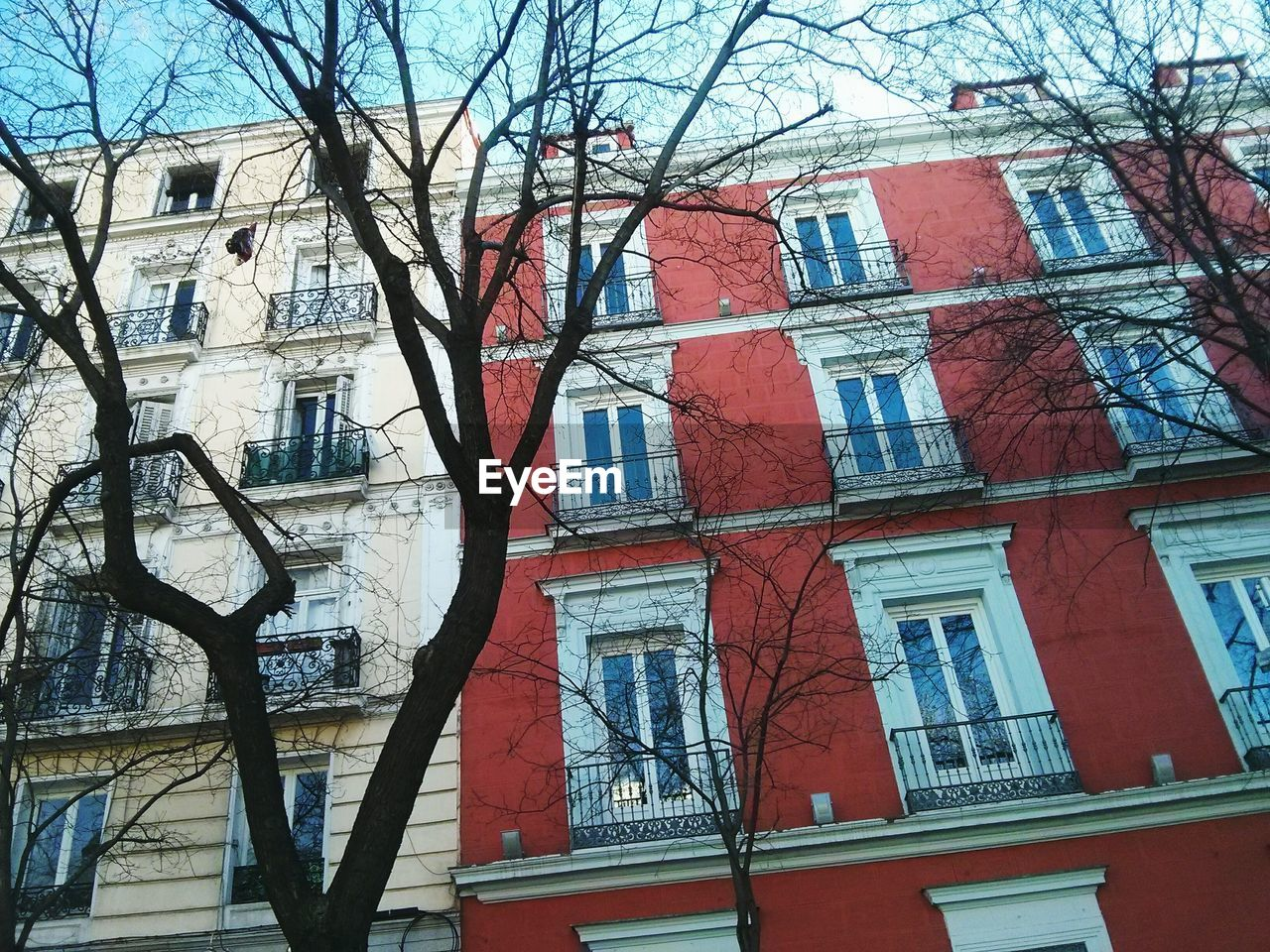architecture, building exterior, bare tree, built structure, window, low angle view, no people, tree, branch, day, outdoors, city, sky