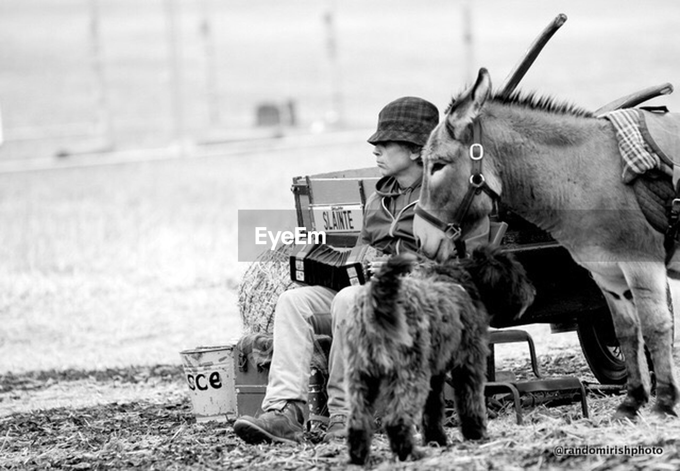 animal themes, mammal, domestic animals, field, men, livestock, horse, togetherness, rear view, transportation, lifestyles, focus on foreground, working animal, mode of transport, sitting, full length, standing