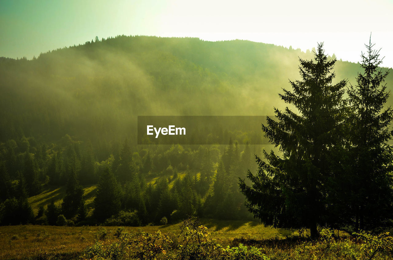 tree, nature, growth, landscape, tranquility, beauty in nature, scenics, no people, tranquil scene, forest, outdoors, fog, green color, mountain, day, plant, sky