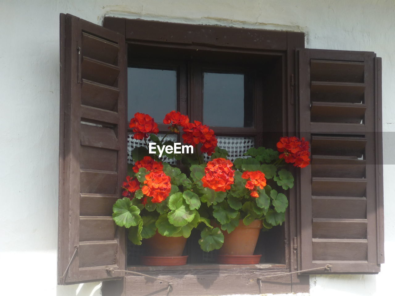 flower, plant, growth, window, fragility, potted plant, beauty in nature, freshness, nature, petal, window box, no people, flower head, blooming, day, outdoors, architecture, zinnia, close-up