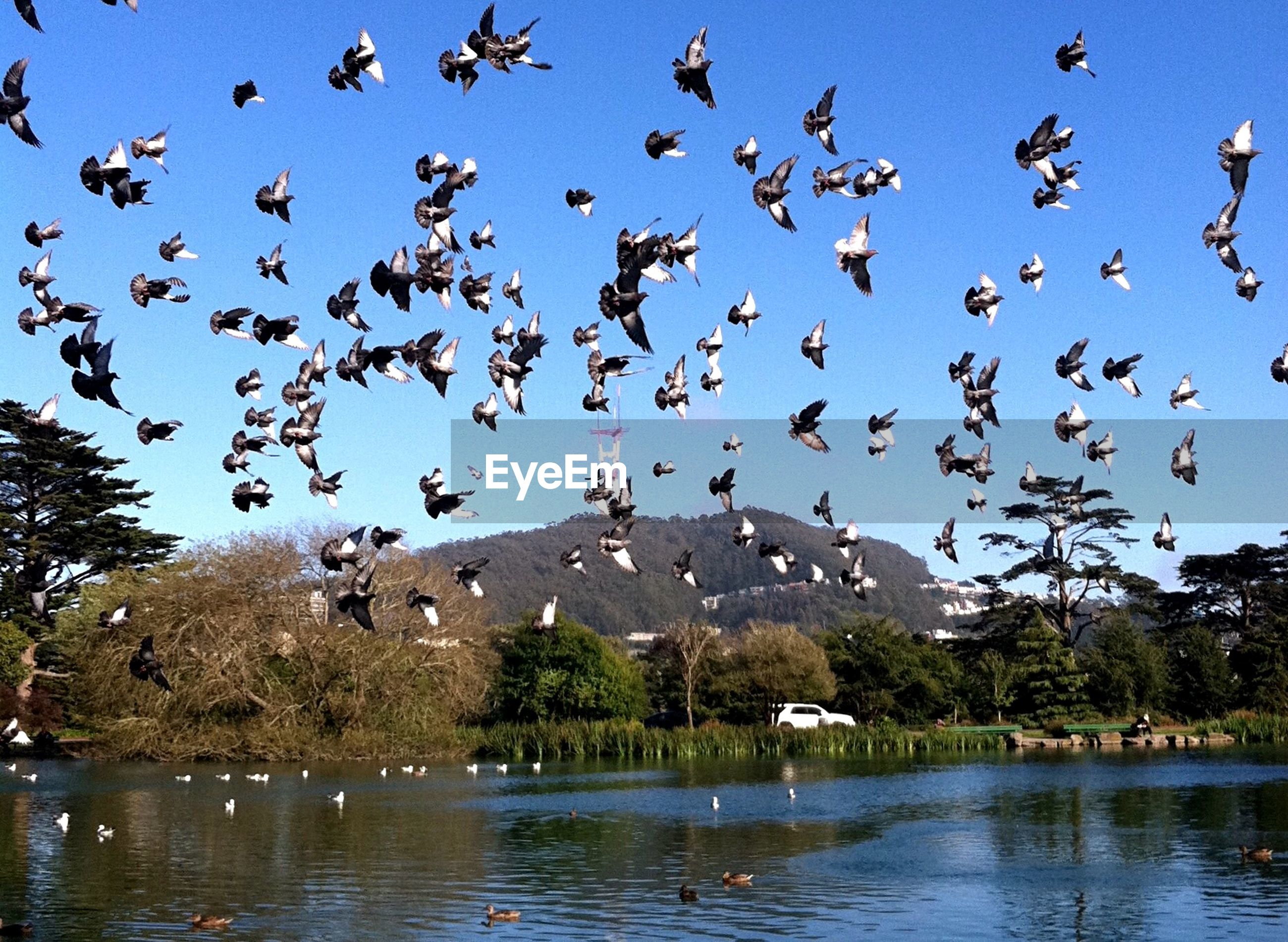 Low angle view of pigeons flying over lake