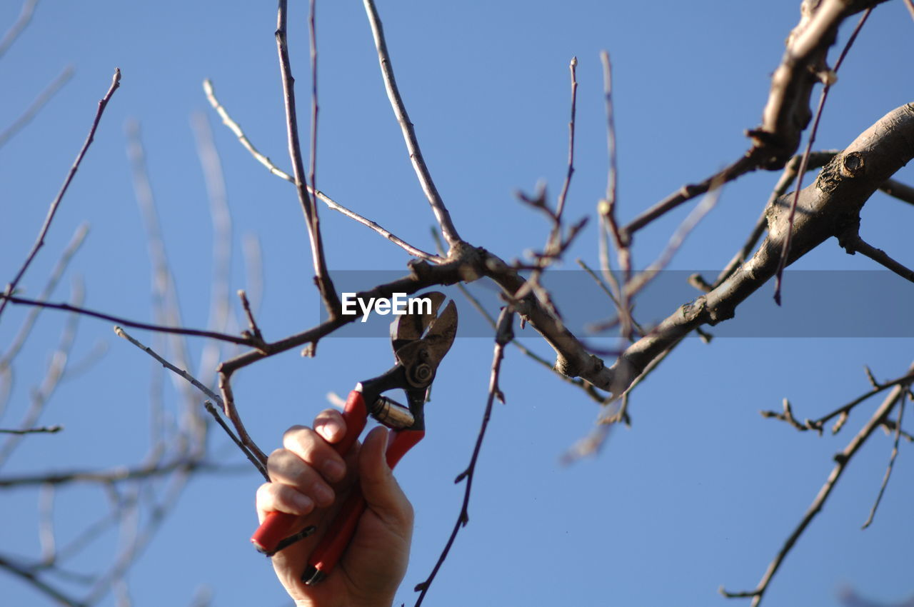 Low Angle View Of Hand Pruning Branches Against Sky