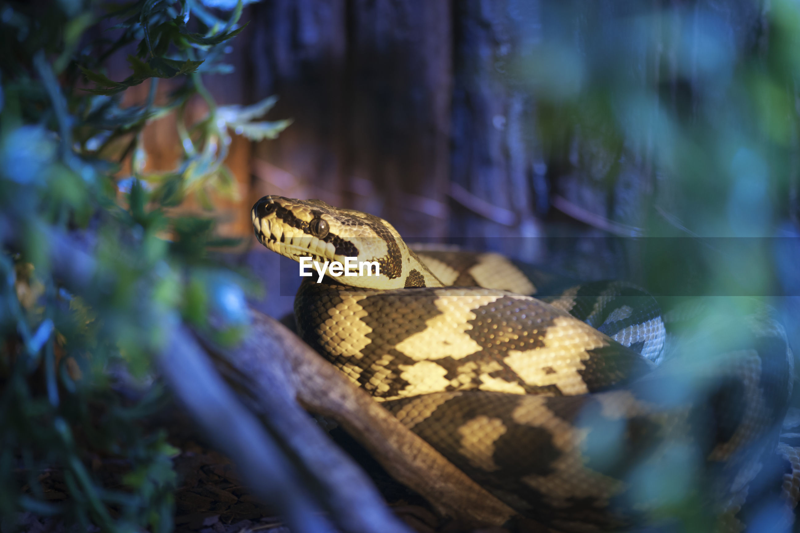 Close-up of snake amidst plants at zoo