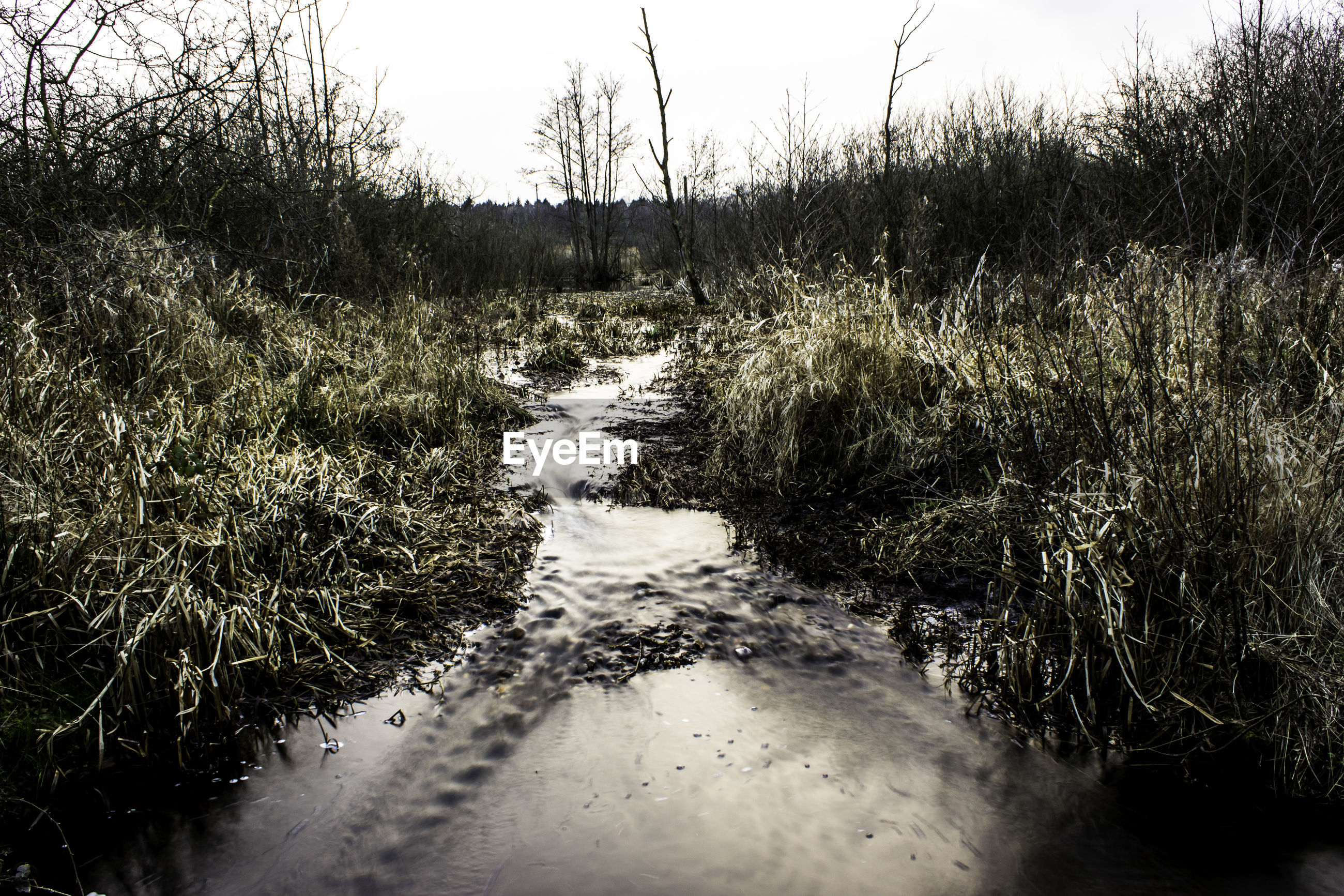 Stream flowing amidst grass against sky