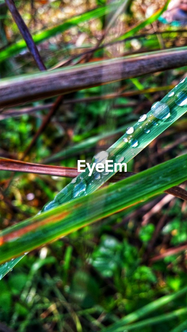 plant, green color, close-up, day, animal themes, invertebrate, animal wildlife, animal, nature, growth, beauty in nature, focus on foreground, animals in the wild, one animal, no people, grass, plant part, leaf, outdoors, insect, blade of grass, dew