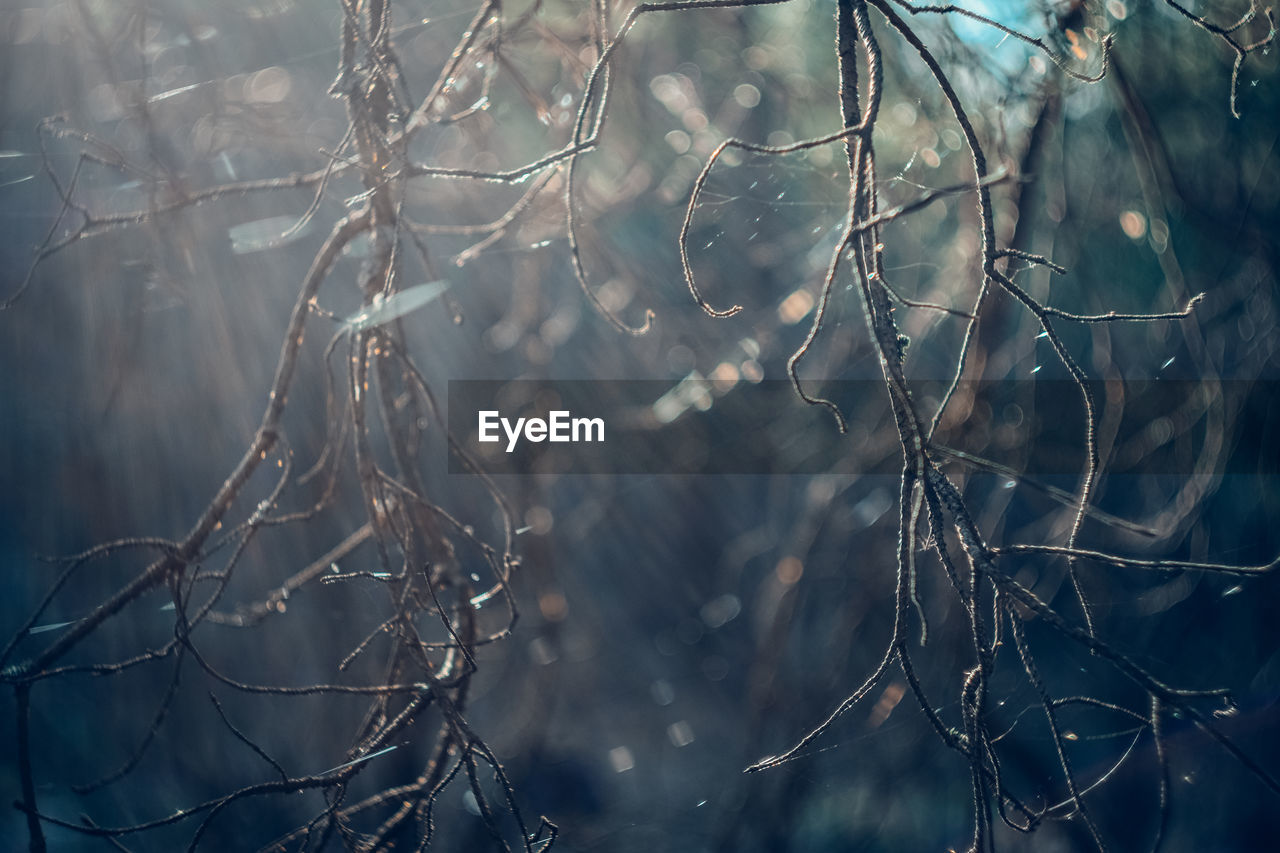 plant, tree, focus on foreground, no people, nature, close-up, beauty in nature, day, branch, selective focus, growth, tranquility, wet, winter, water, outdoors, fragility, drop, vulnerability, dead plant, rain, rainy season, raindrop