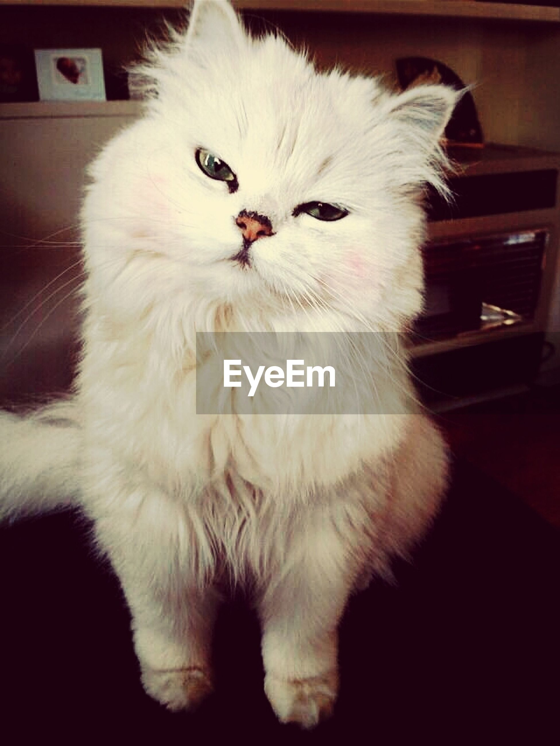 animal themes, domestic animals, pets, one animal, indoors, mammal, domestic cat, cat, white color, feline, close-up, whisker, animal head, relaxation, home interior, white, looking away, zoology, no people, vertebrate