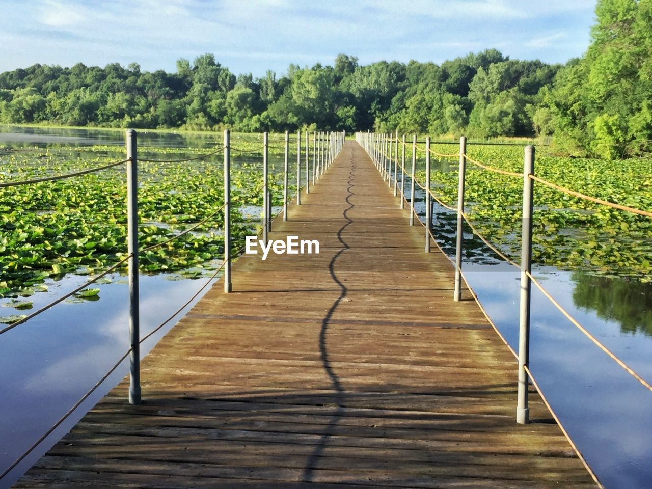 the way forward, plant, direction, tree, nature, sky, no people, day, tranquility, railing, diminishing perspective, wood - material, tranquil scene, sunlight, beauty in nature, cloud - sky, growth, scenics - nature, green color, connection, outdoors, wood, footbridge, long