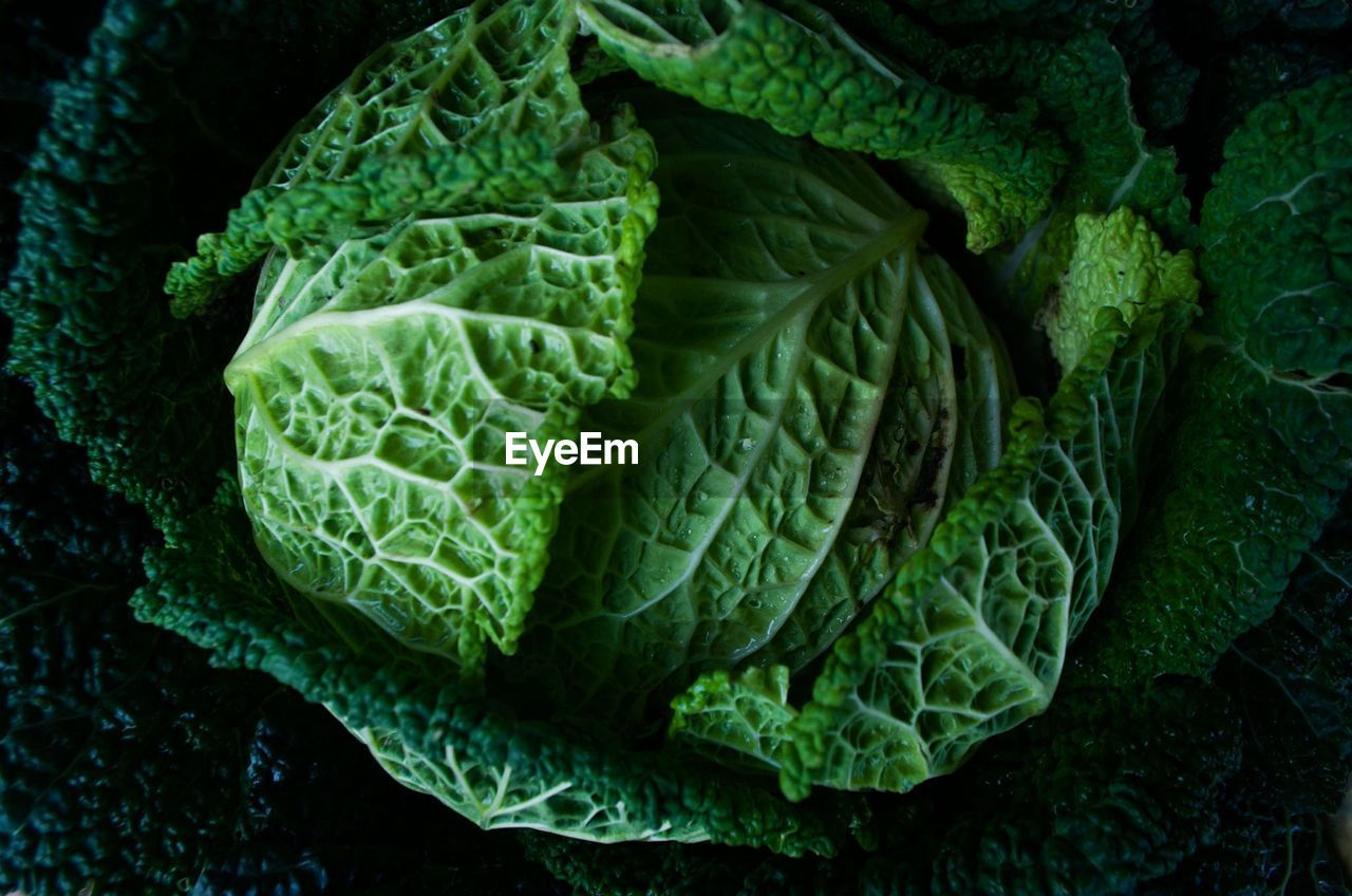 green color, healthy eating, vegetable, wellbeing, food and drink, food, freshness, cabbage, close-up, no people, leaf, plant part, indoors, full frame, backgrounds, raw food, directly above, leaf vein, growth, kale, leaves, vegetarian food
