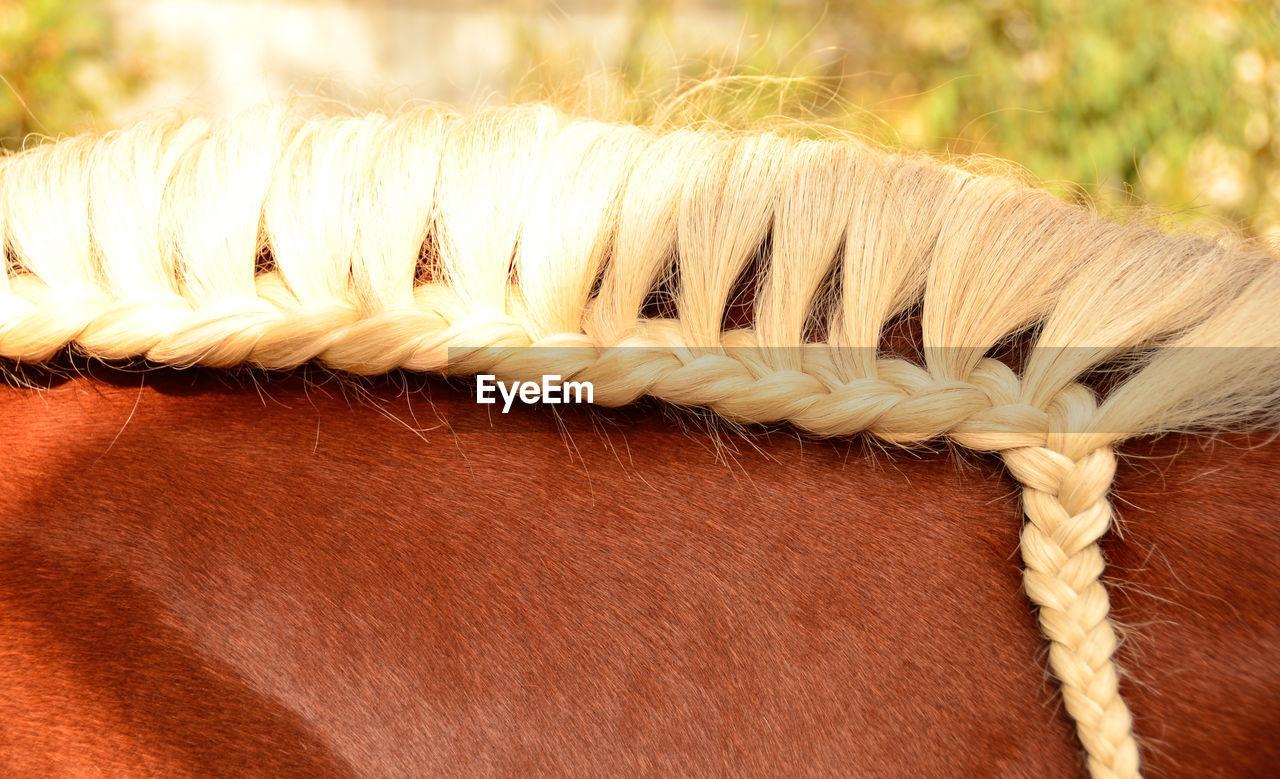 Cropped image of horse braided mane