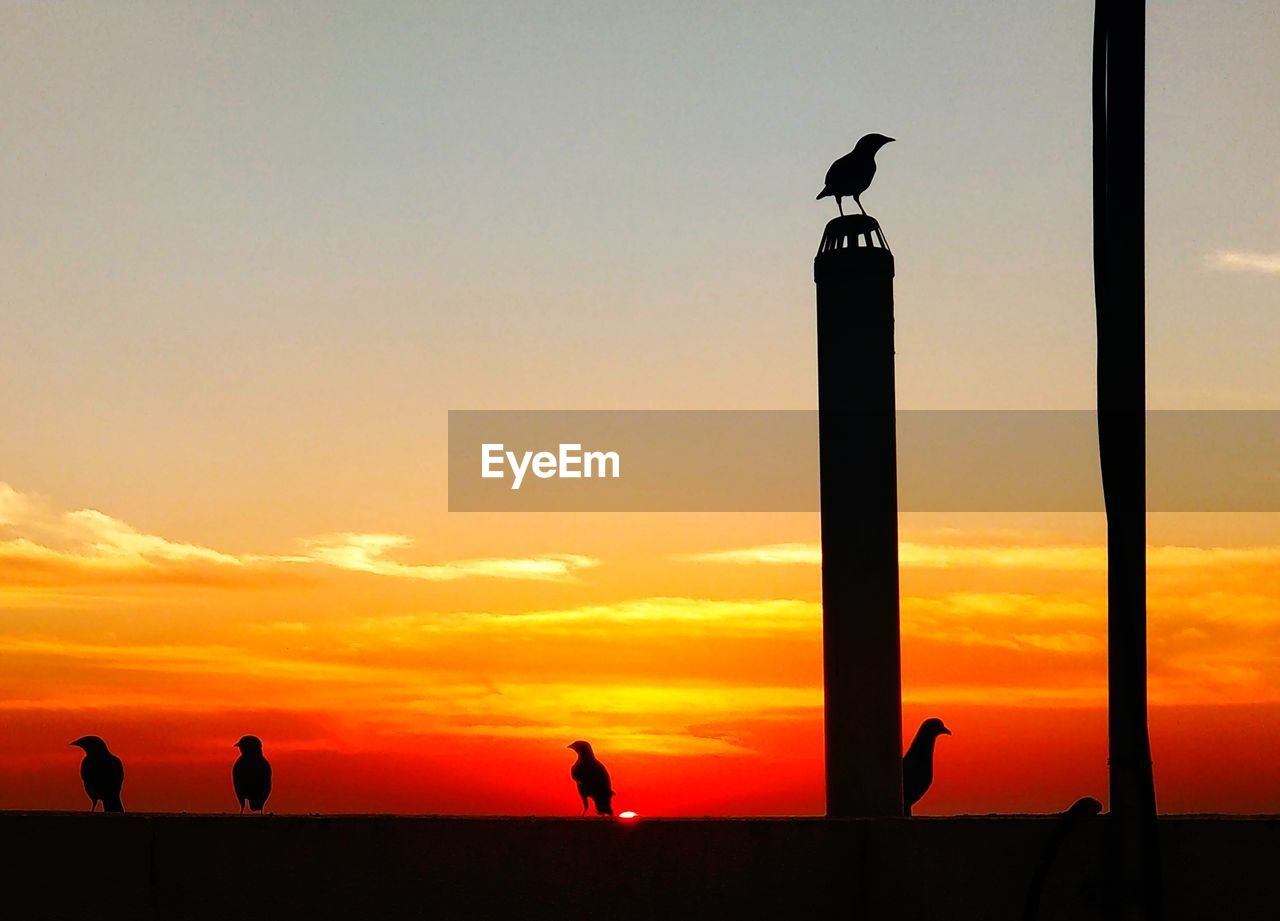 sunset, sky, silhouette, orange color, bird, vertebrate, animals in the wild, animal wildlife, beauty in nature, real people, nature, one animal, outdoors, scenics - nature, perching, cloud - sky, group of people, men